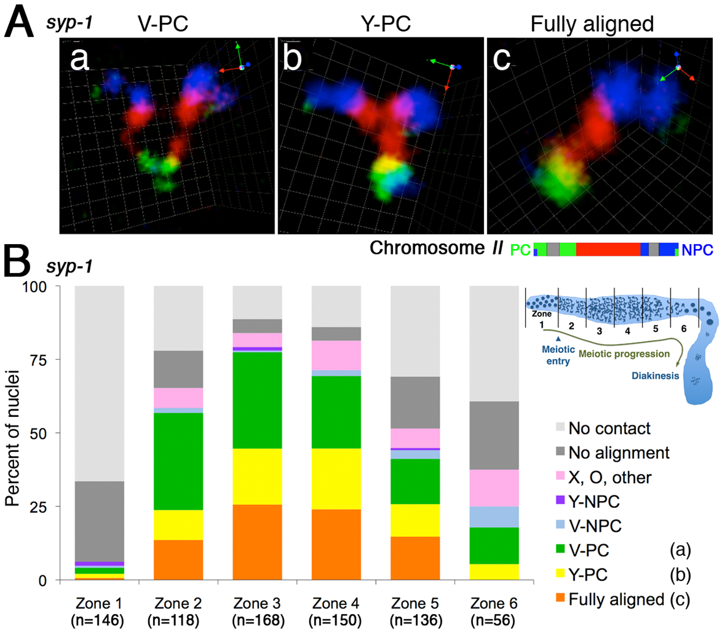 Homologous chromosomes can achieve full alignment in the absence of synaptonemal complex formation.