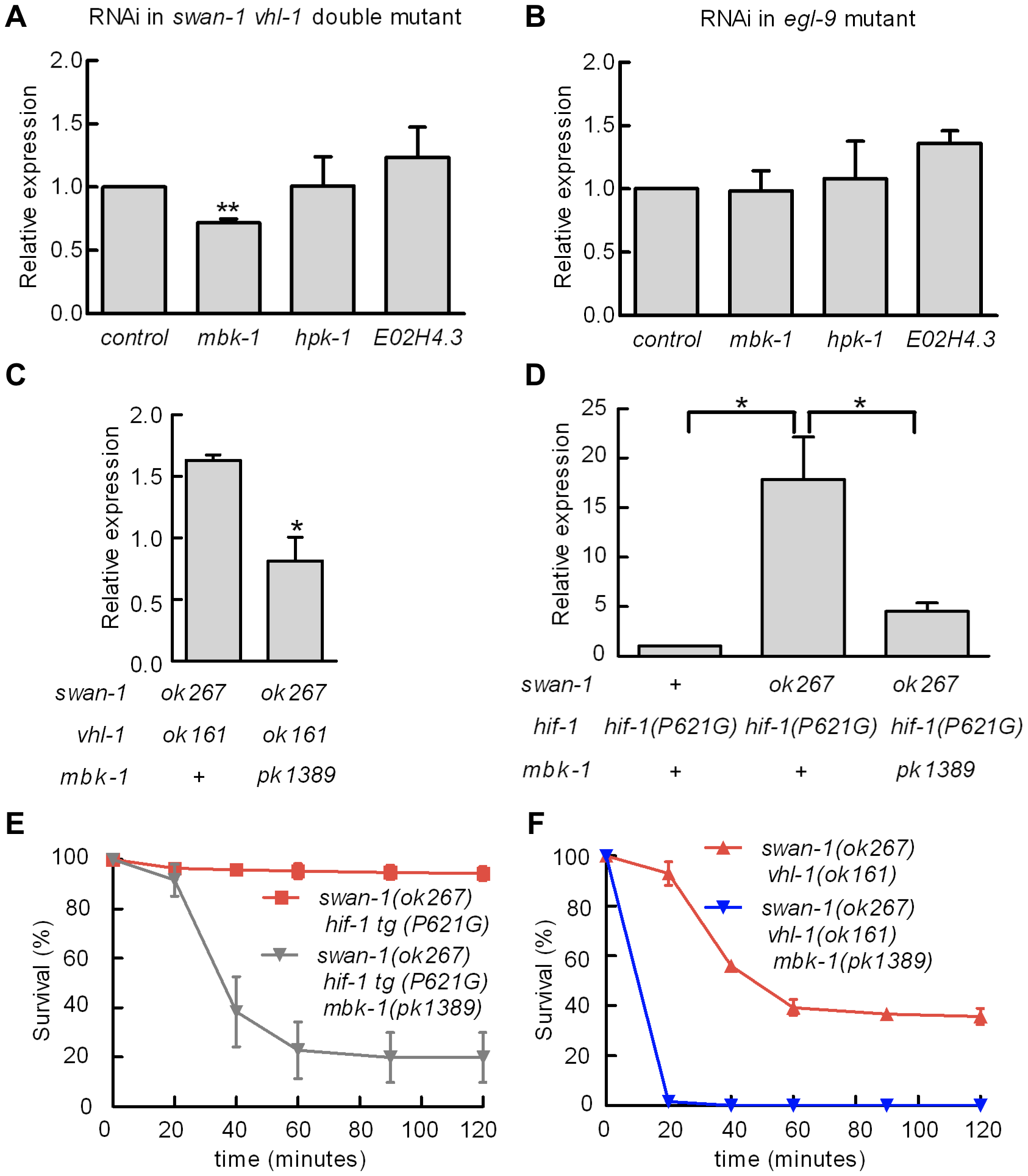 Genetic interactions between <i>swan-1</i> and <i>mbk-1</i>/DYRK to regulate P<i>nhr-57:</i>:GFP expression and resistance to <i>P. aeruginosa</i> fast killing.