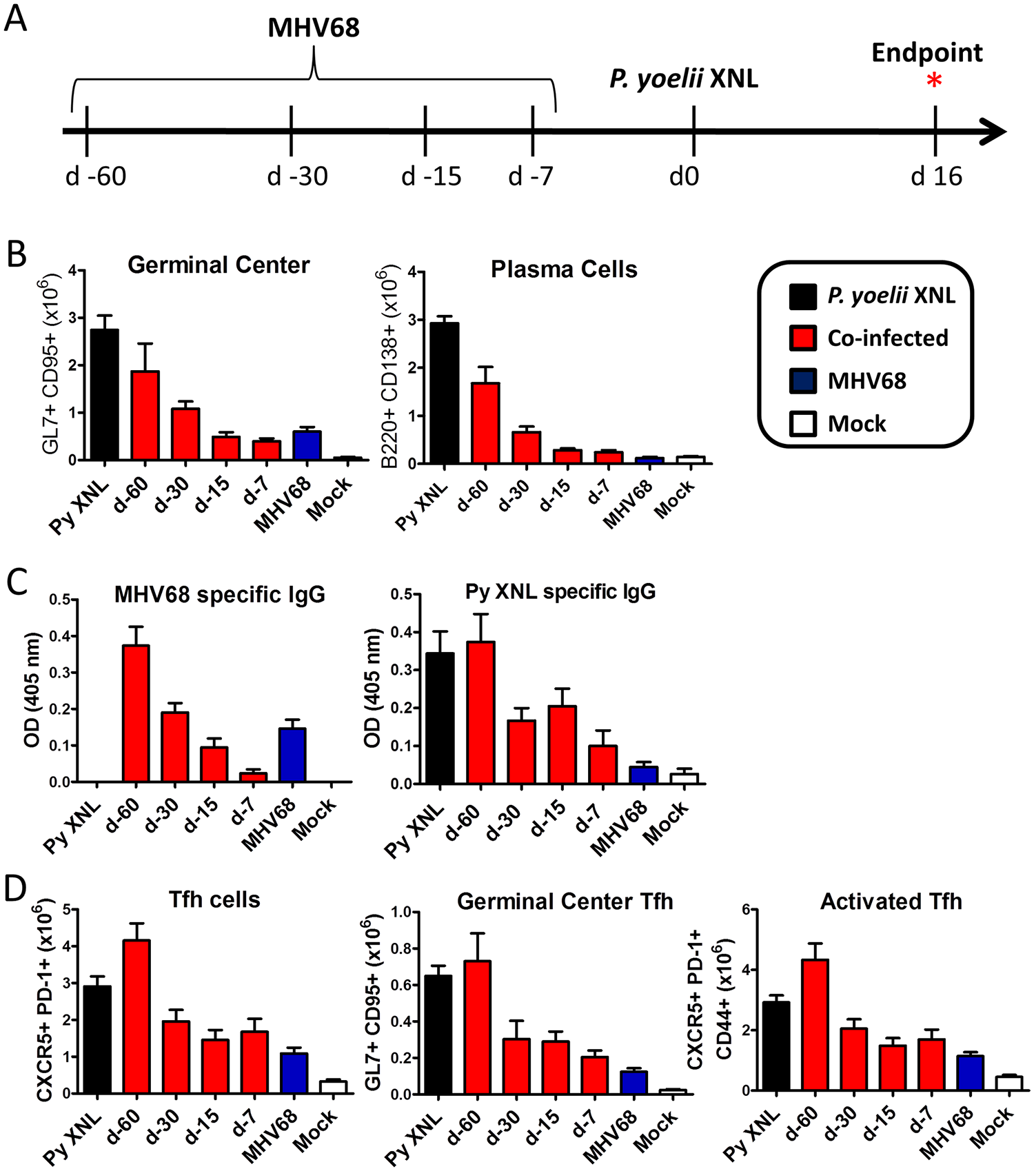 Acute, but not latent, MHV68 infection results in suppressed humoral response.