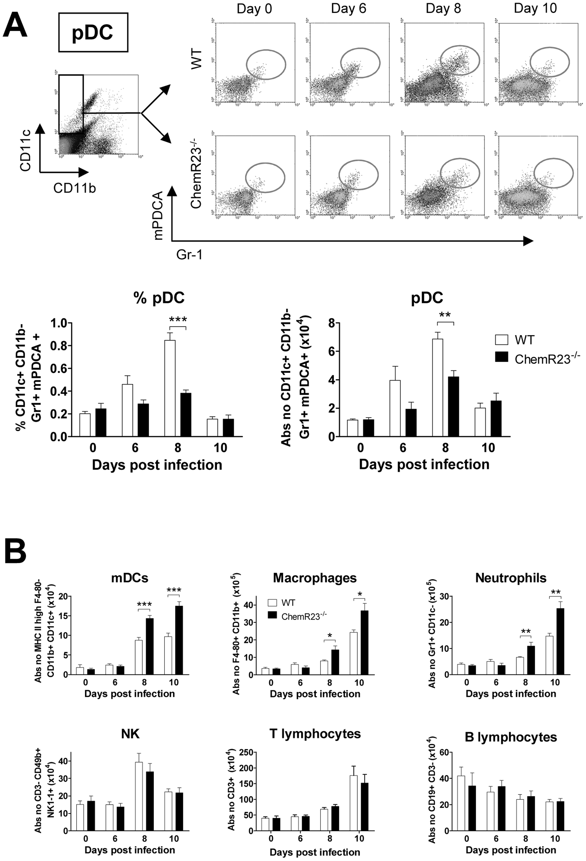 Plasmacytoid dendritic cell recruitment to the lung is less efficient in ChemR23<sup>−/−</sup> mice during PVM infection.