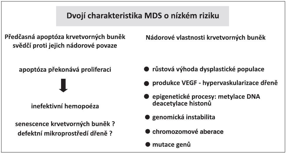 MDS o nízkém riziku na jedné straně se vyznačuje předčasnou apoptózou, na druhé straně typickými vlastnostmi nádorových buněk.
