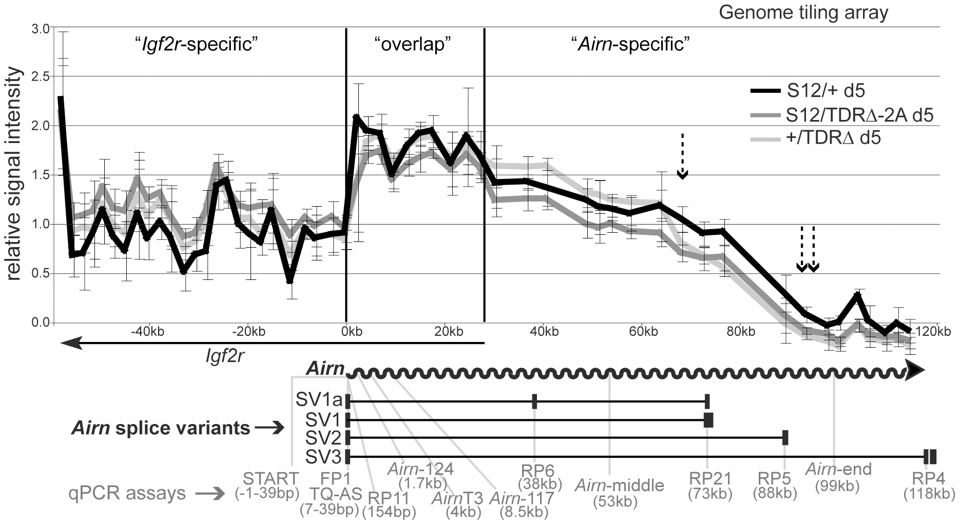 Tandem direct repeats play a role in <i>Airn</i> processivity.