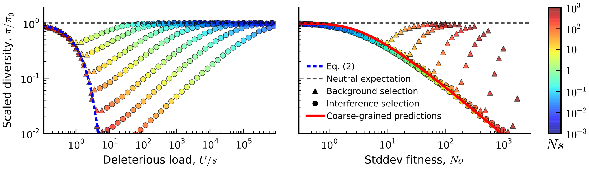 The average reduction in silent site diversity relative to the neutral expectation.