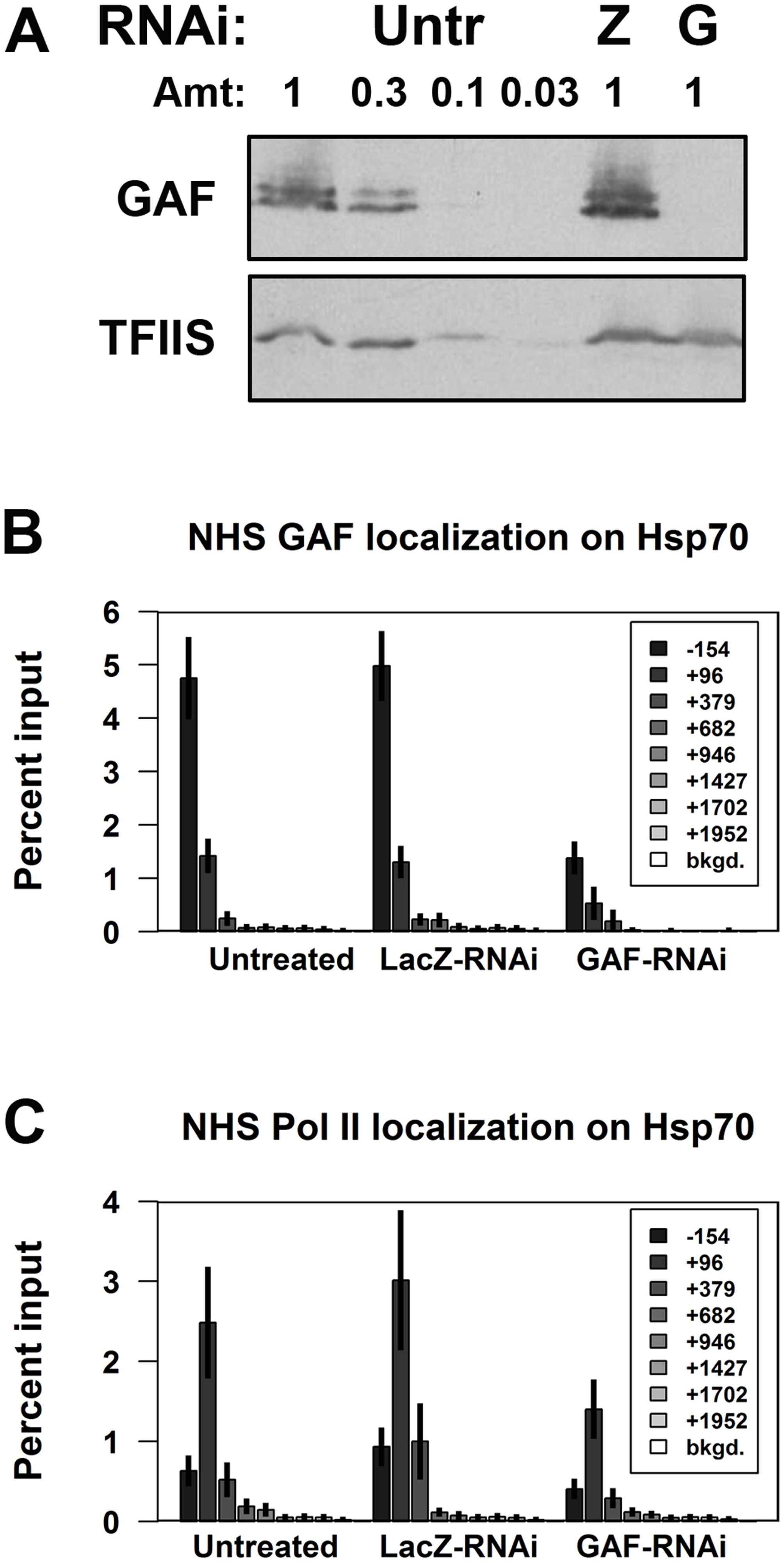 Depletion of GAF reduces paused polymerase on NHS <i>Hsp70</i>.