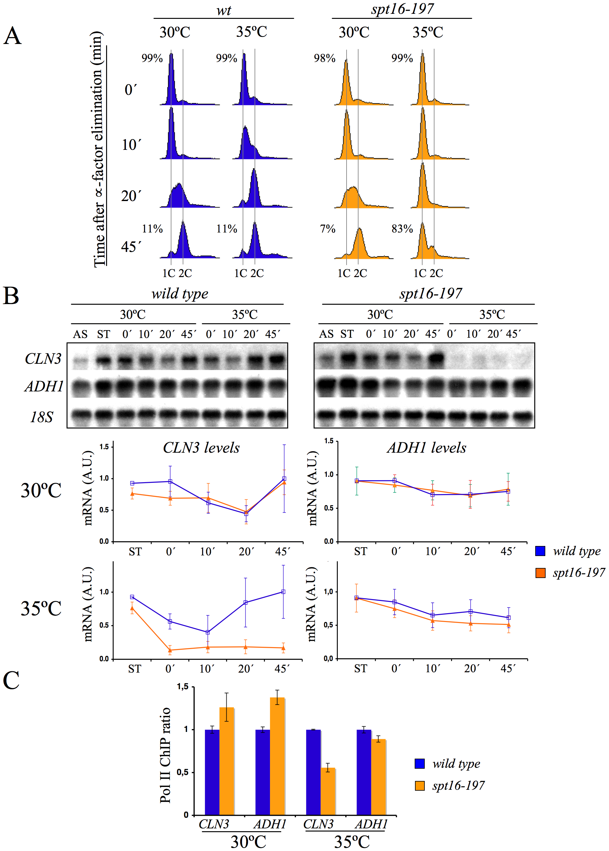 <i>CLN3</i> expression is down-regulated after Spt16 inactivation.
