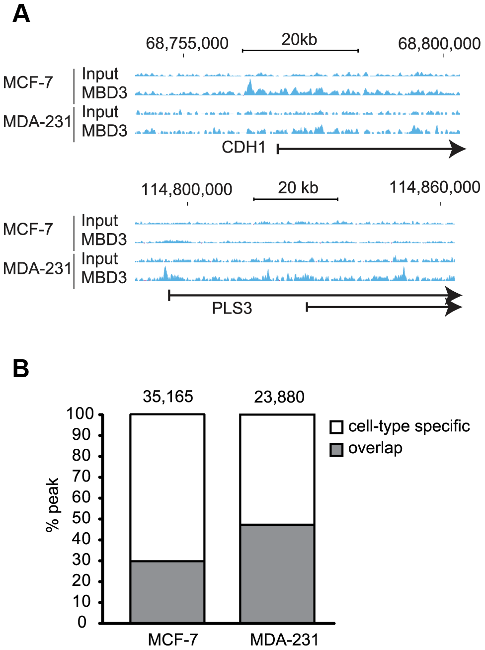 MBD3 localizes in a cell-type specific manner by ChIP-seq.