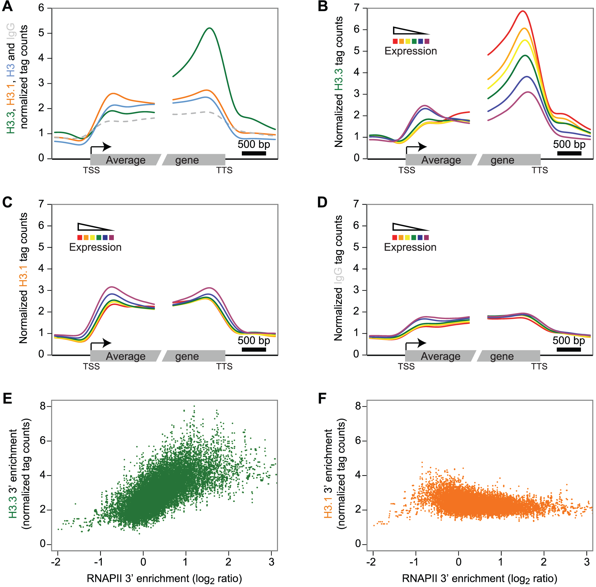 H3.3 enrichment profile over genes correlates with expression and is biased towards the 3′ end.