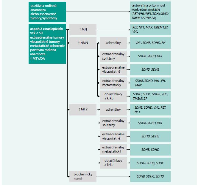 Schéma 1. Algoritmus na smerovanie genetického testovania u pacientov s FEO/PGL.