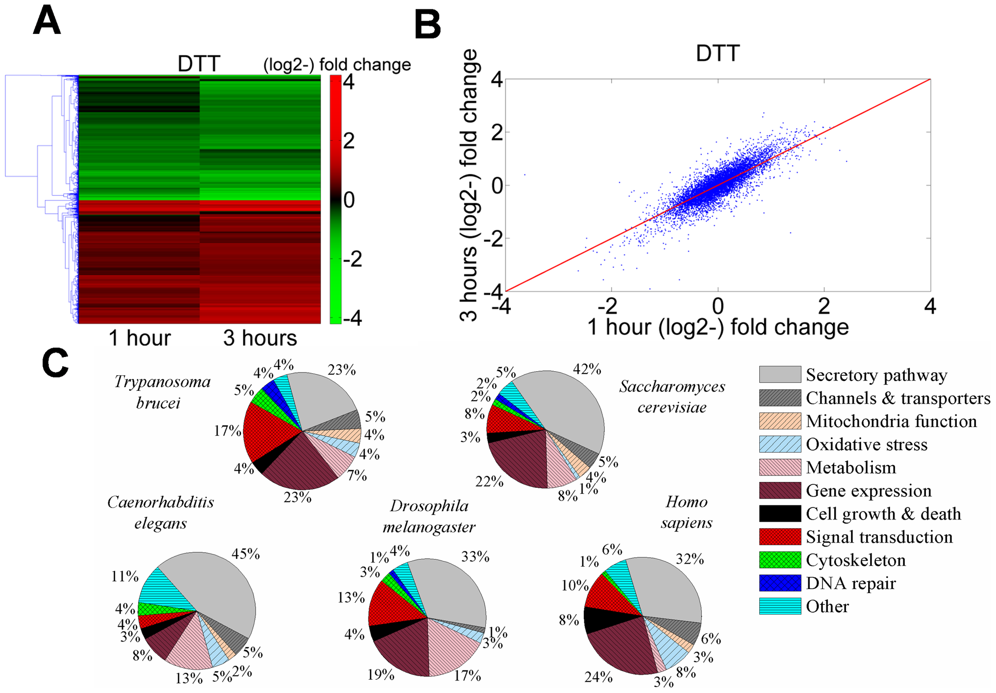Transcriptome changes in <i>T. brucei</i> treated with DTT resemble analogous changes in other eukaryotes.