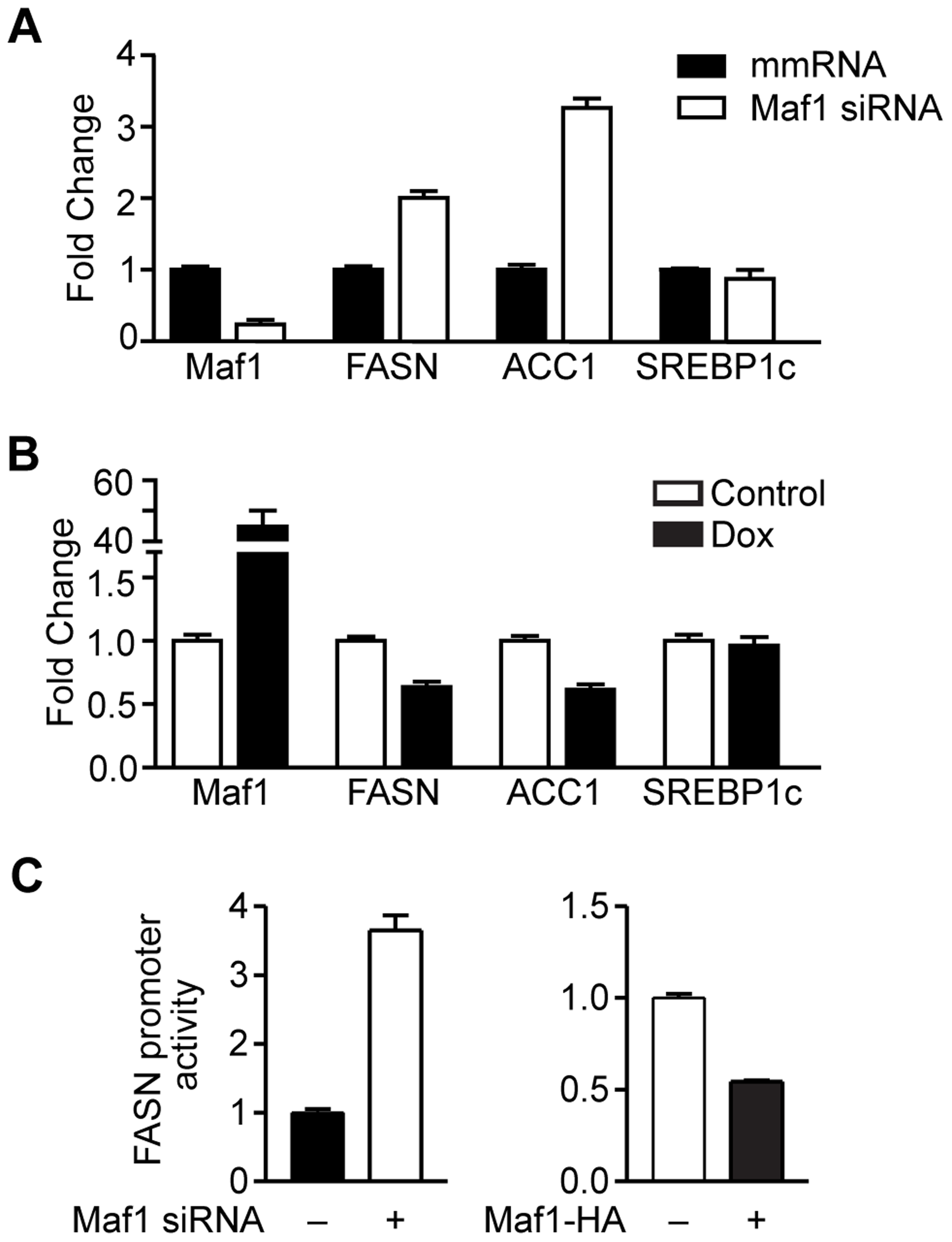 Maf1 negatively regulates fatty acid synthase (FASN) and acetyl-coA carboxylase (ACC1) expression.