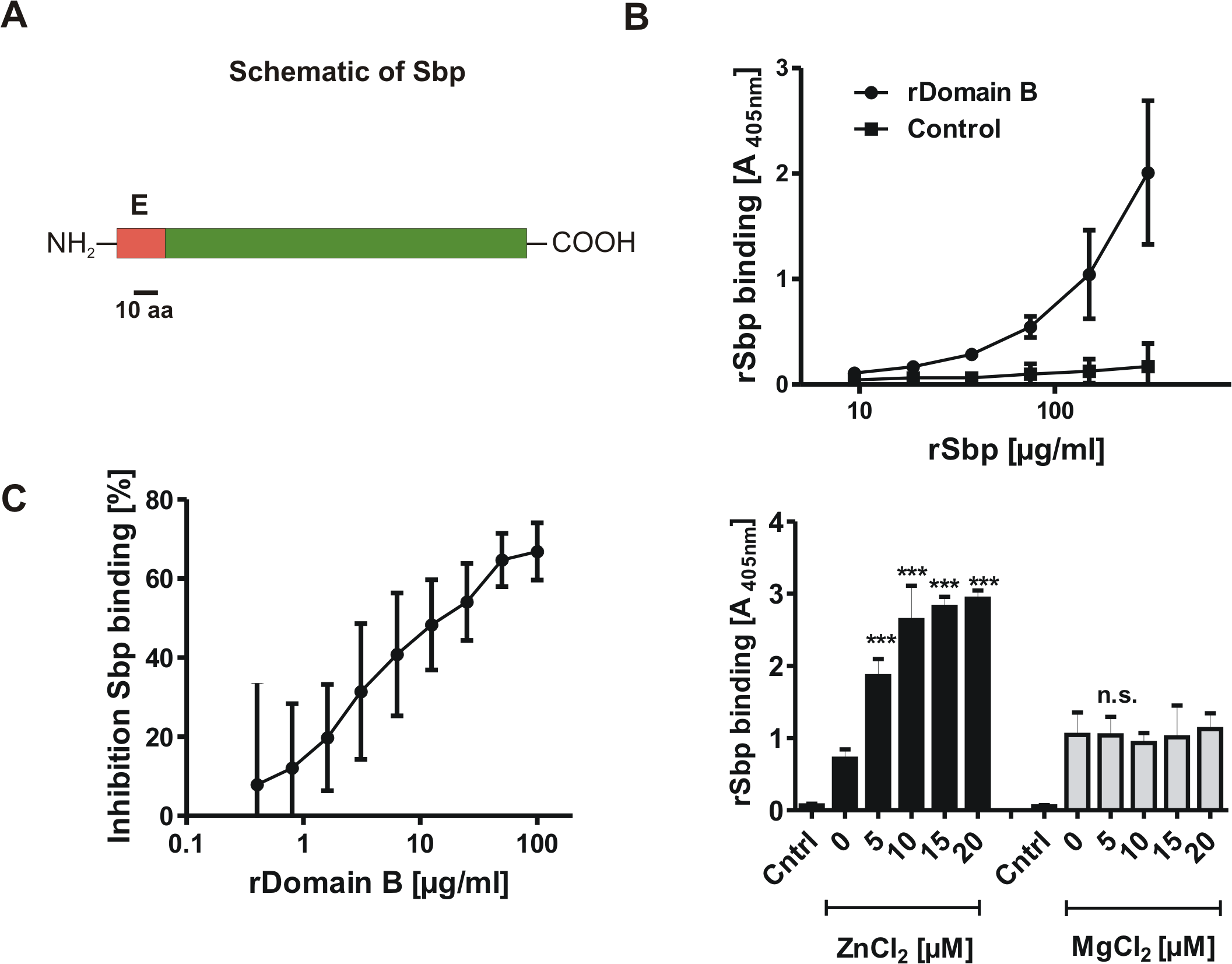 General features of Small basic protein (Sbp) and Biochemical analysis of rDomain-B—Sbp interactions.