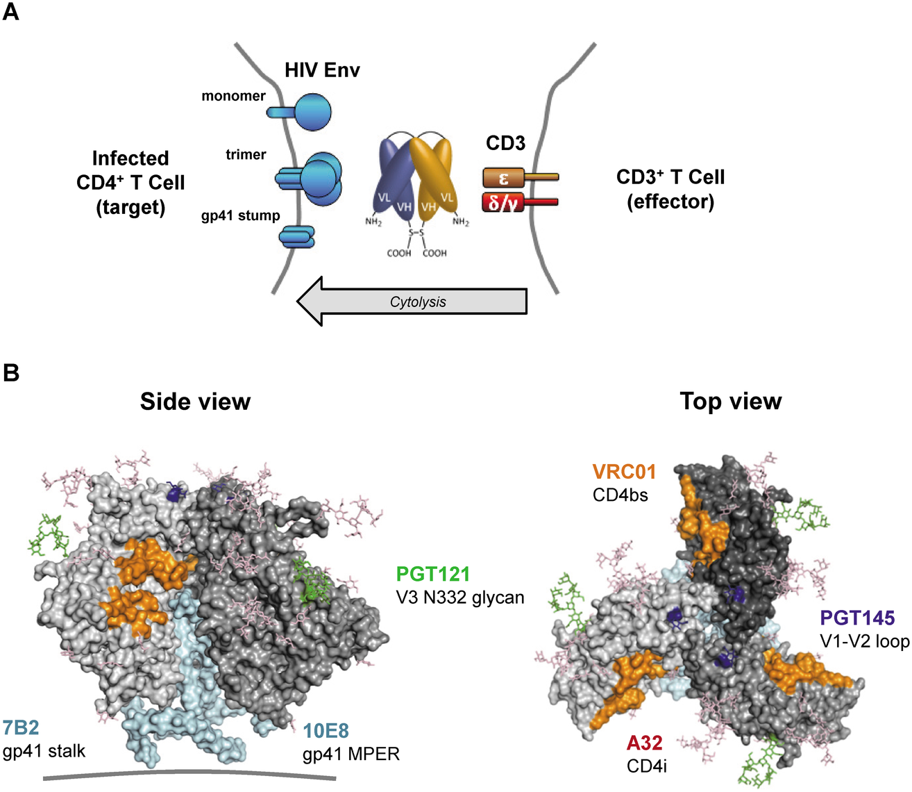 HIVxCD3 DARTs retarget cytolytic CD3<sup>+</sup> T-cells to Env-expressing HIV-infected CD4<sup>+</sup> T-cells.