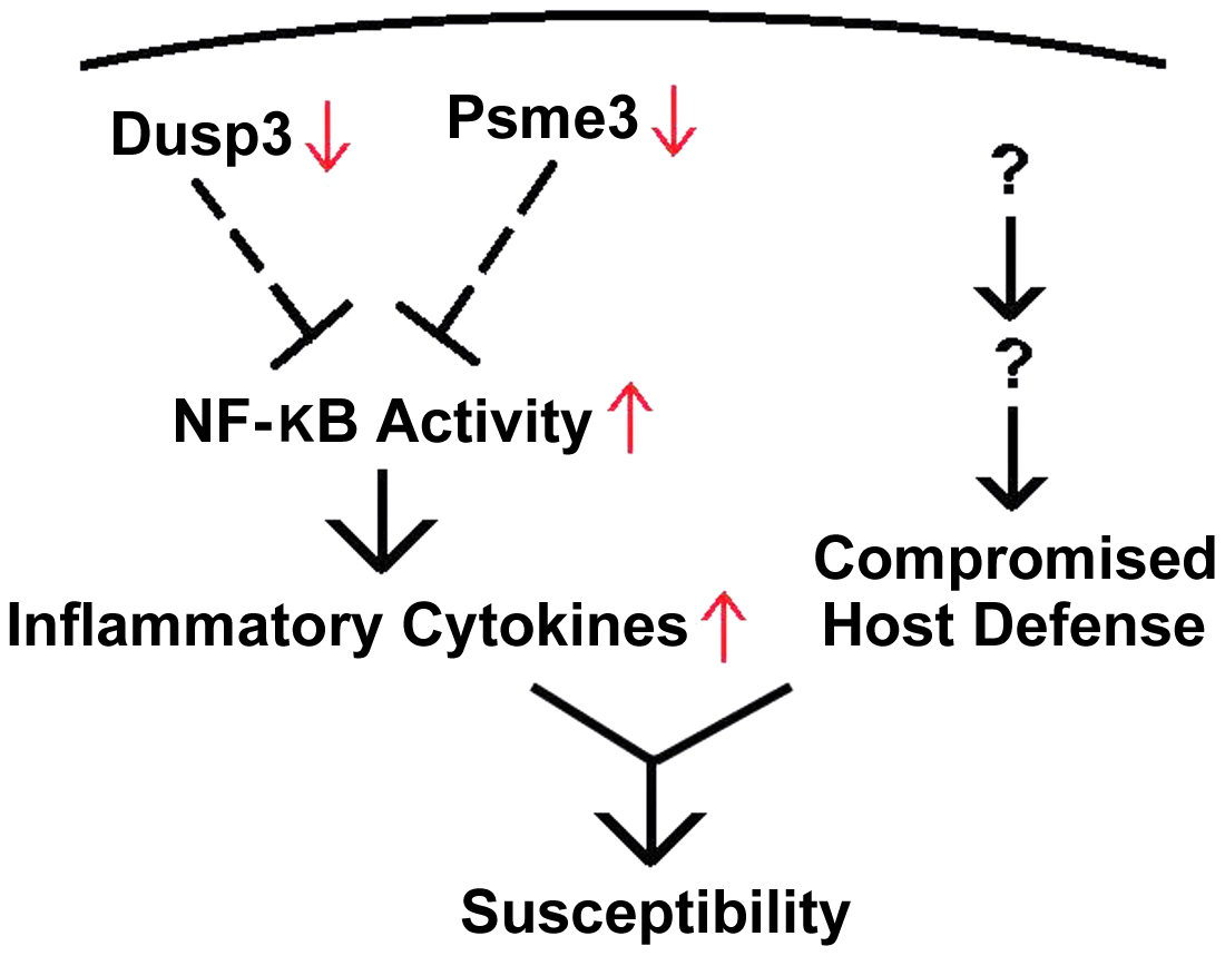 Down-regulation of <i>Dusp3</i> and <i>Psme3</i> in A/J is associated with over-production of pro-inflammatory cytokines.