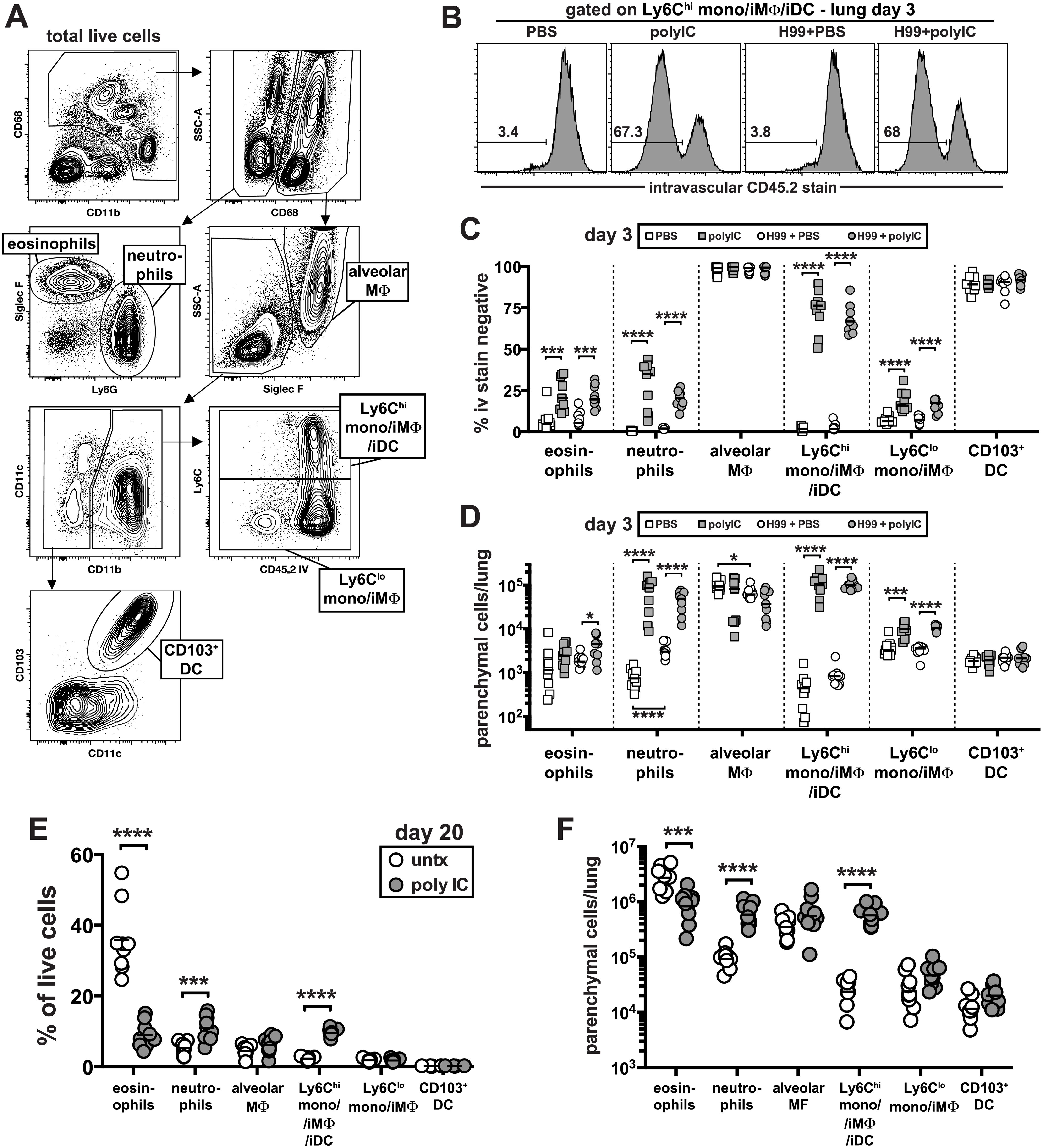 Delivery of pICLC into the airways induces the rapid influx of neutrophils and Ly6C<sup>high</sup> monocytes into the lung tissue parenchyma and suppresses <i>C</i>. <i>neoformans</i> induced eosinophilia.
