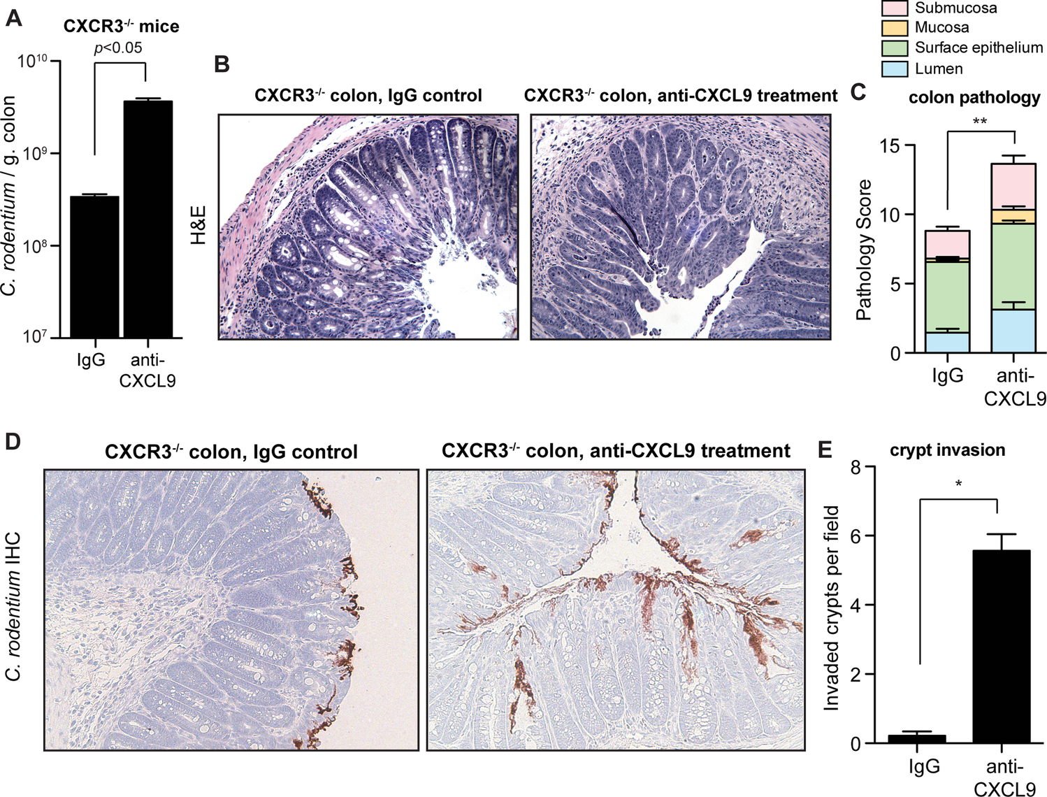 CXCL9-mediated host protection against <i>C</i>. <i>rodentium</i> is independent of CXCR3.