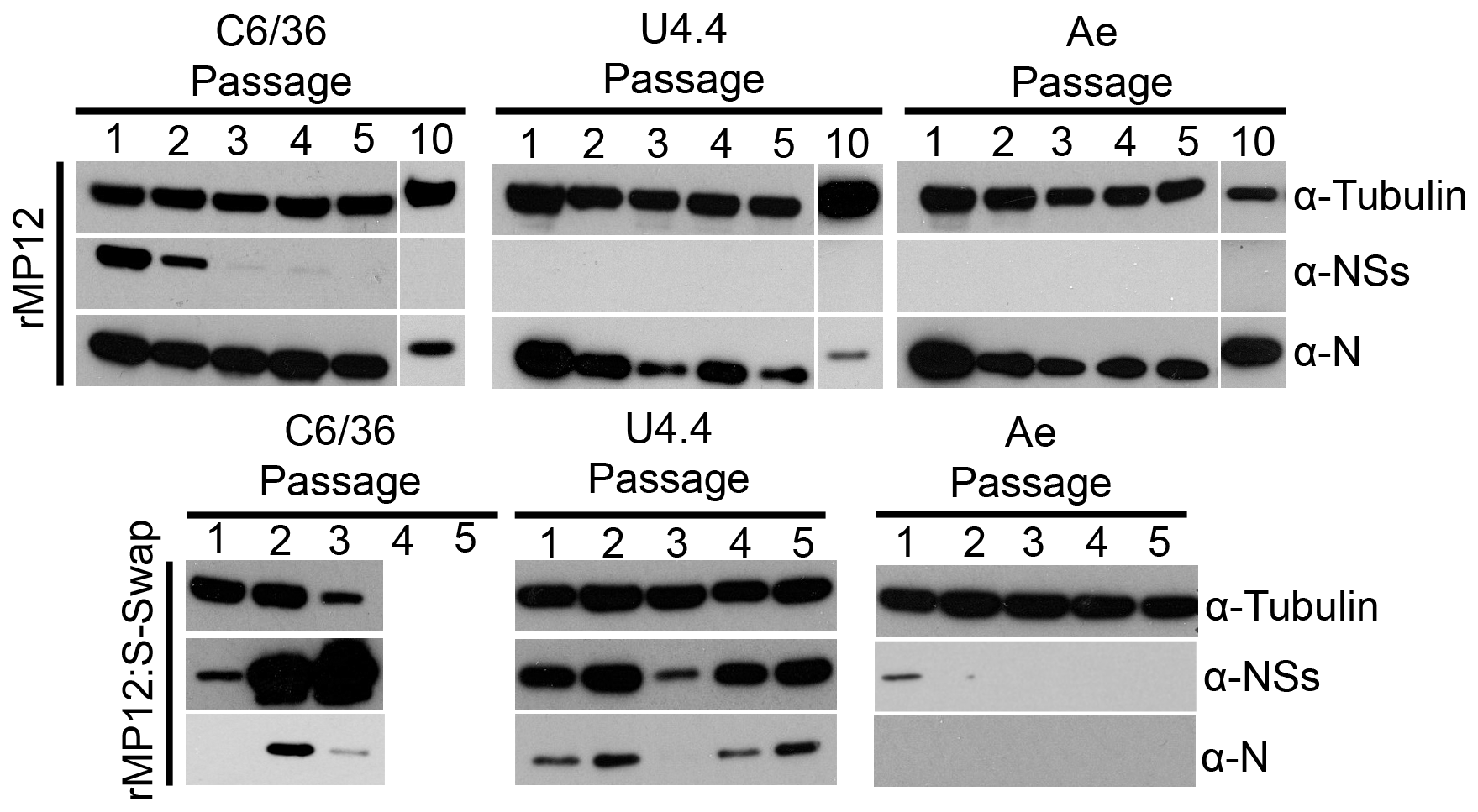 Serial passage of mosquito cells infected with rMP12 or rMP12:S-Swap.