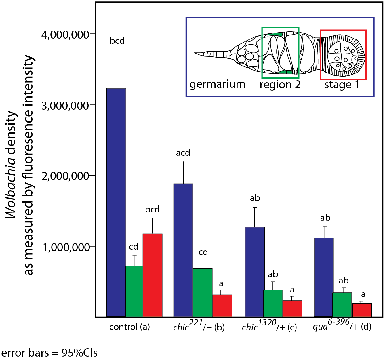 Quantification of reduction in <i>Wolbachia</i> titer during oogenesis, within the entire germarium (in blue), region 2, including the somatic stem cell niche (SSCN, green) and early egg chambers (stage 1, red).