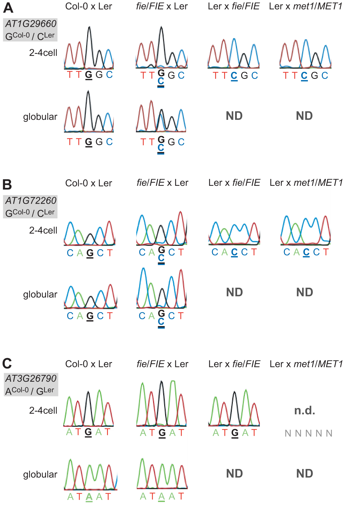 Effect of PRC2 and <i>MET1</i> function on imprinted expression in the embryo.