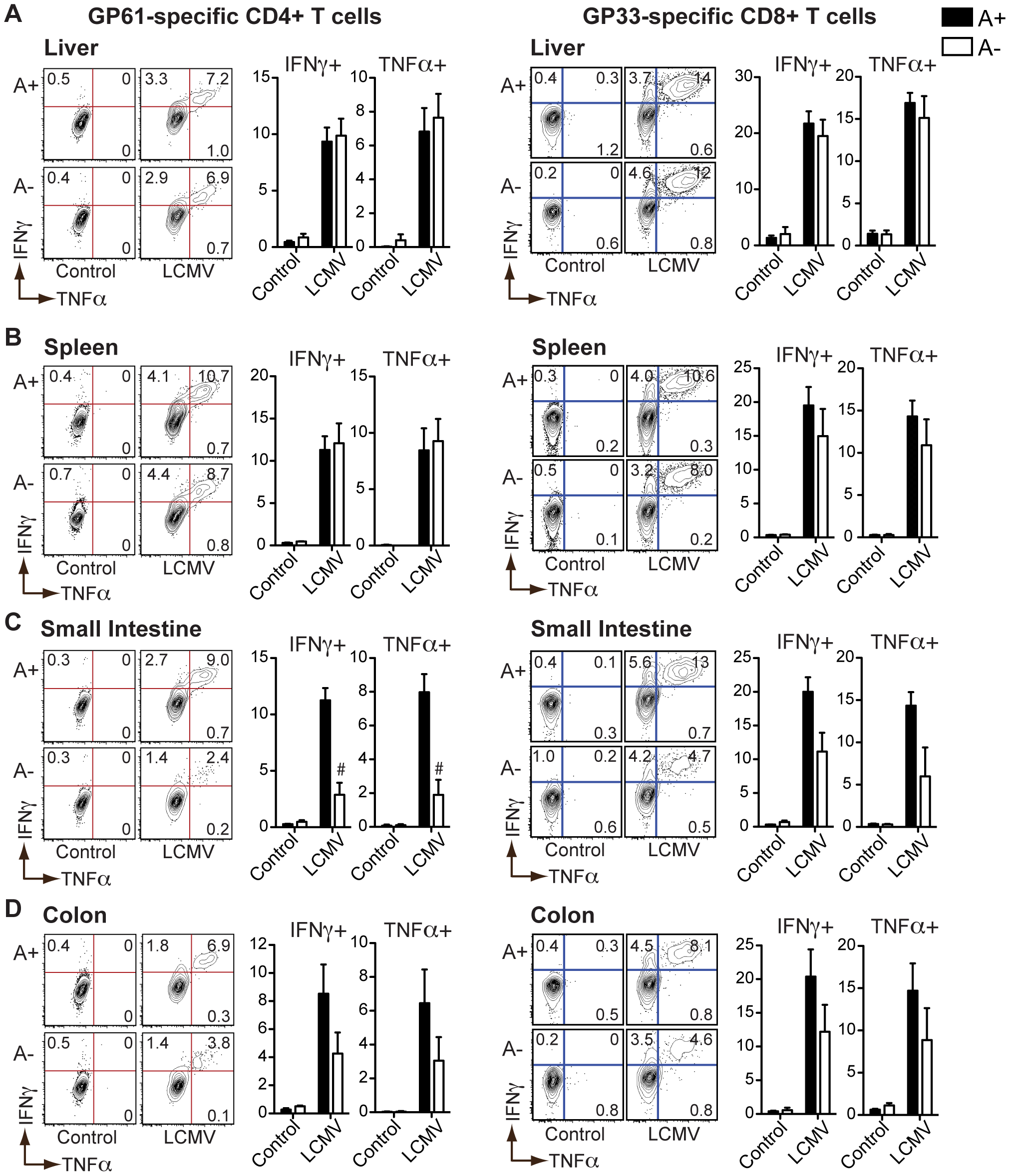 LCMV-specific T<sub>H</sub>1 responses in the intestinal mucosa are dependent on vitamin A metabolites.