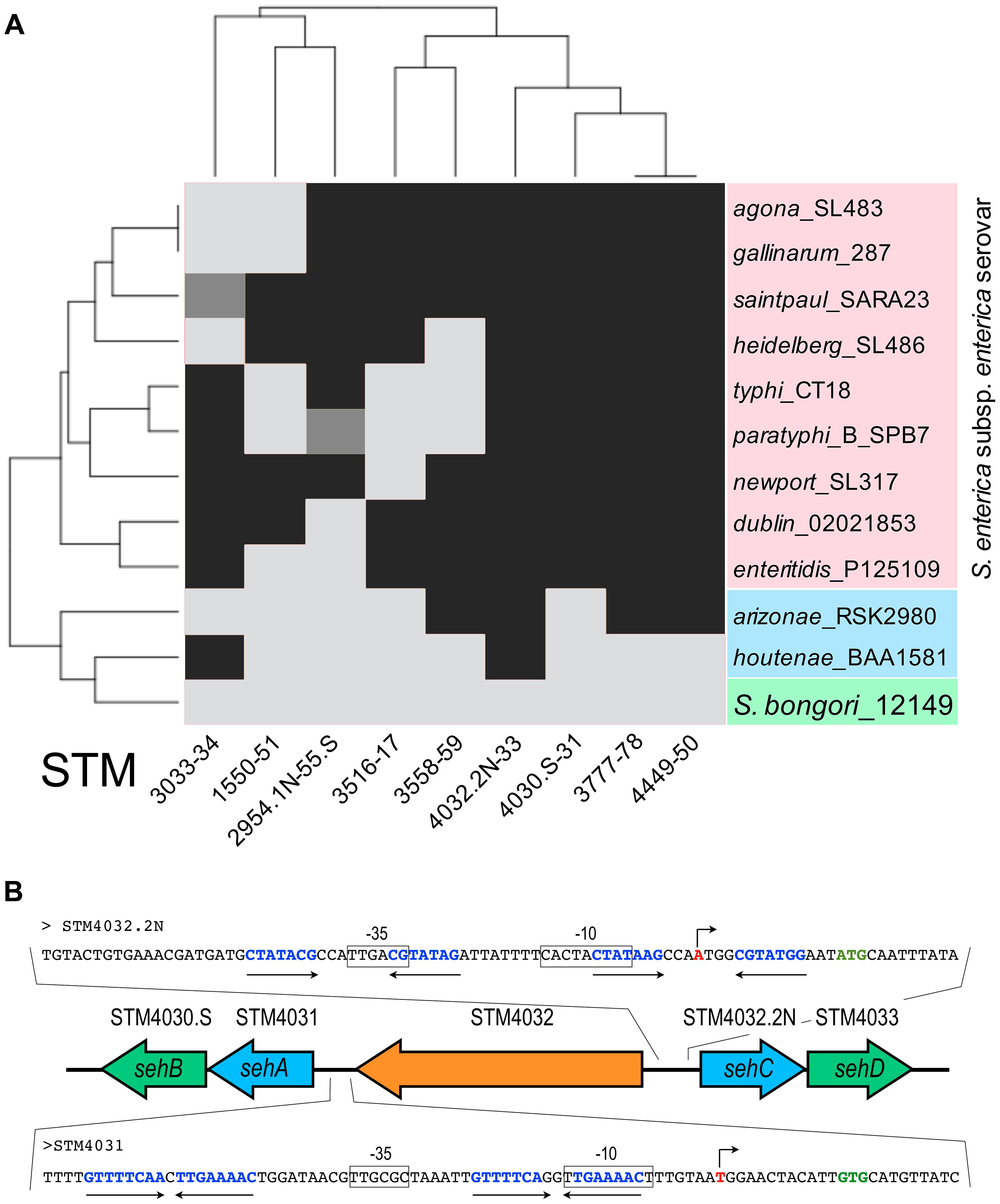 Conservation of TA modules across the genus <i>Salmonella</i>.