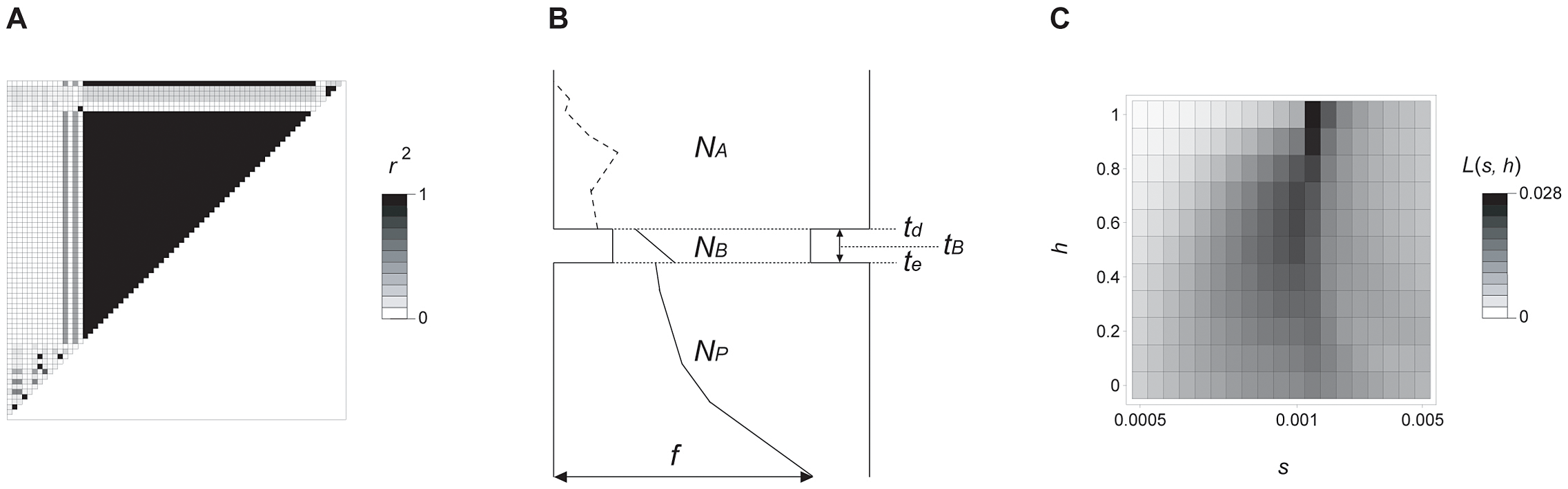 Molecular evolutionary analysis of <i>prol1.1</i>.