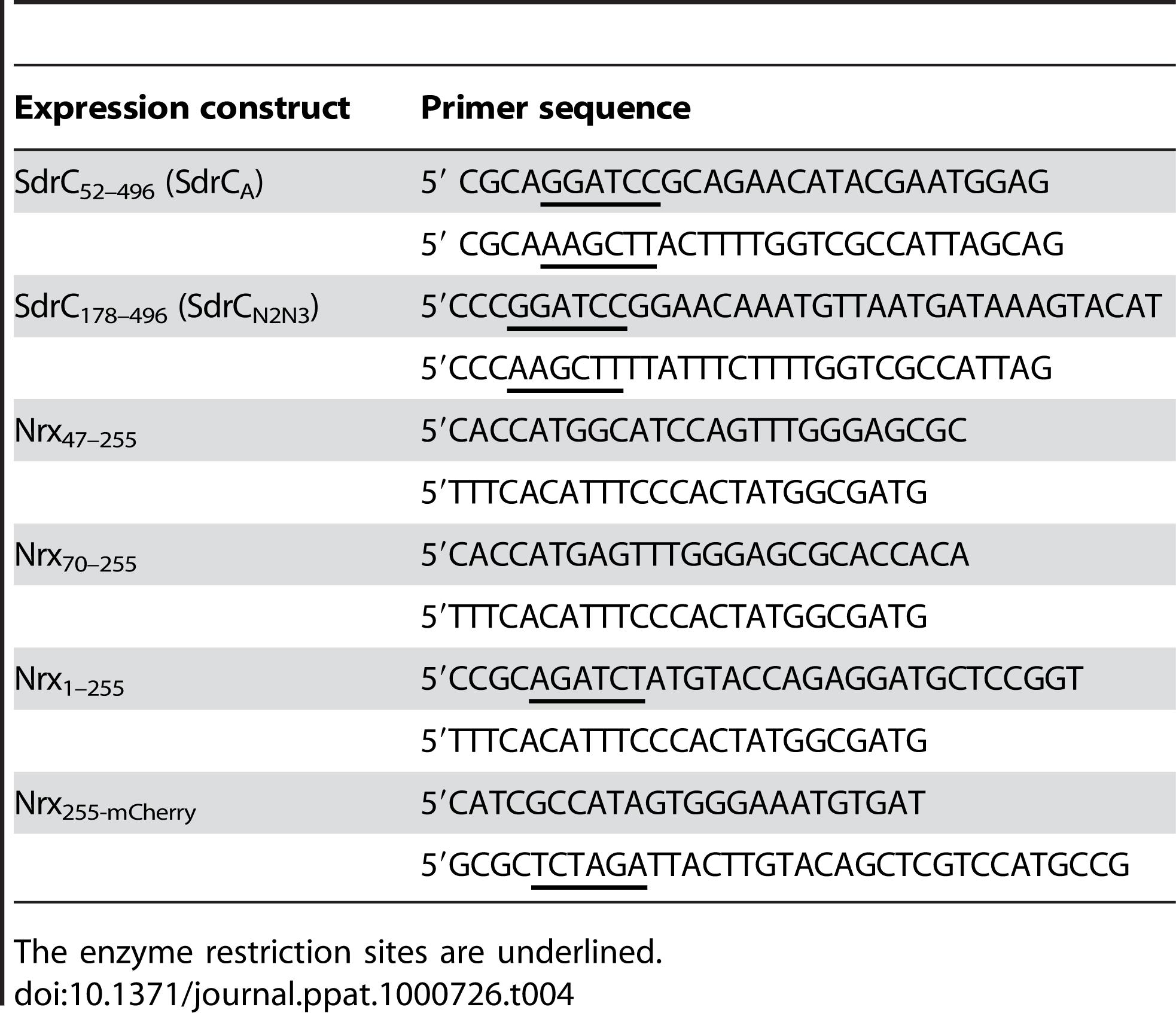 Oligonucleotide primers used to amplify gene fragments.