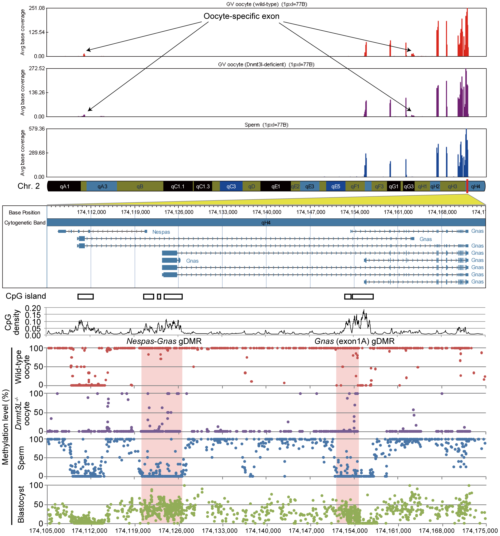 High-resolution genome-wide mRNA expression and CpG methylation profiling.
