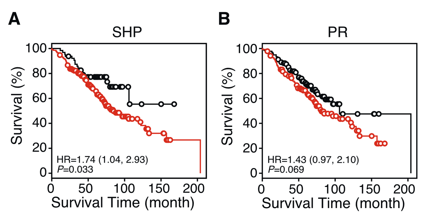 Kaplan-Meier survival plots showing single NR gene predictors in patients with stage I lung cancer.