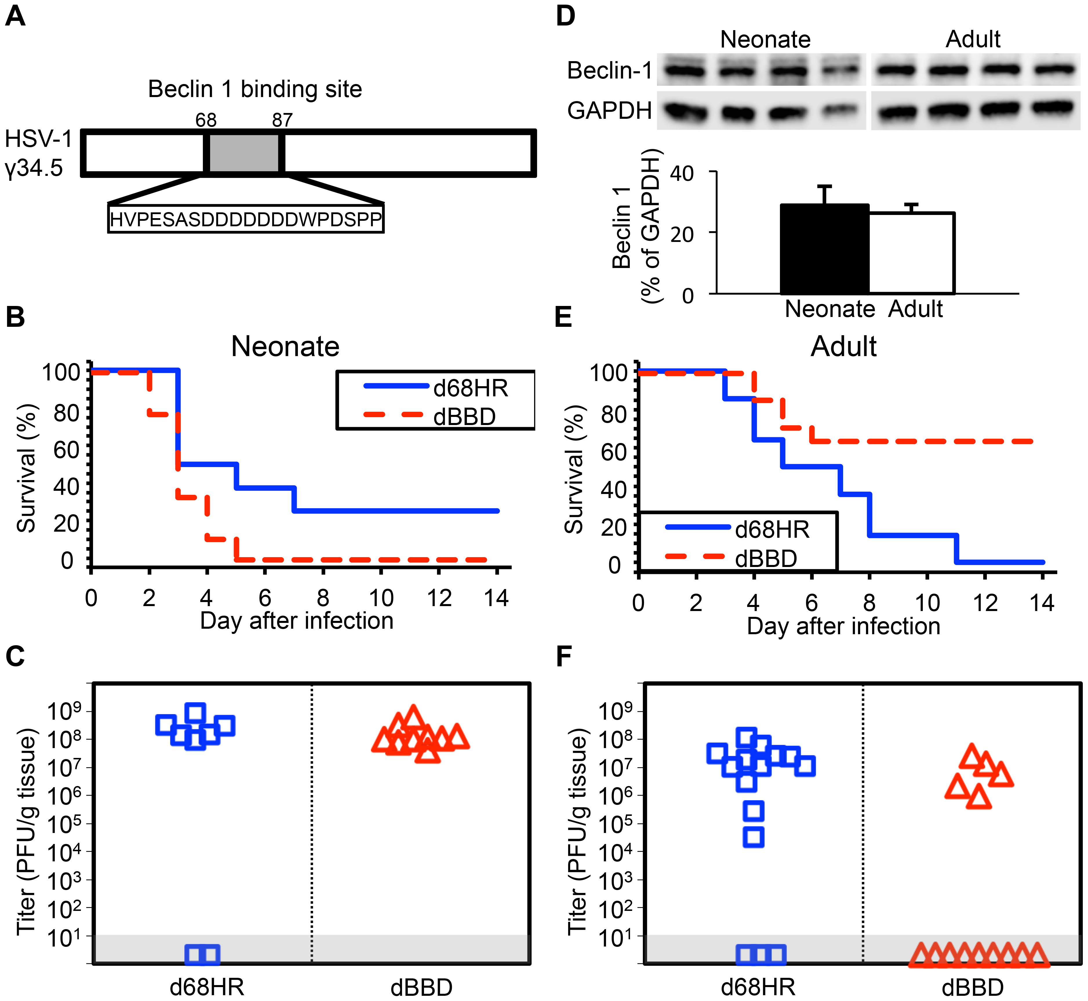 Inhibition of autophagy through beclin 1 binding is dispensable for HSV-1 pathogenesis in the neonatal mouse brain.