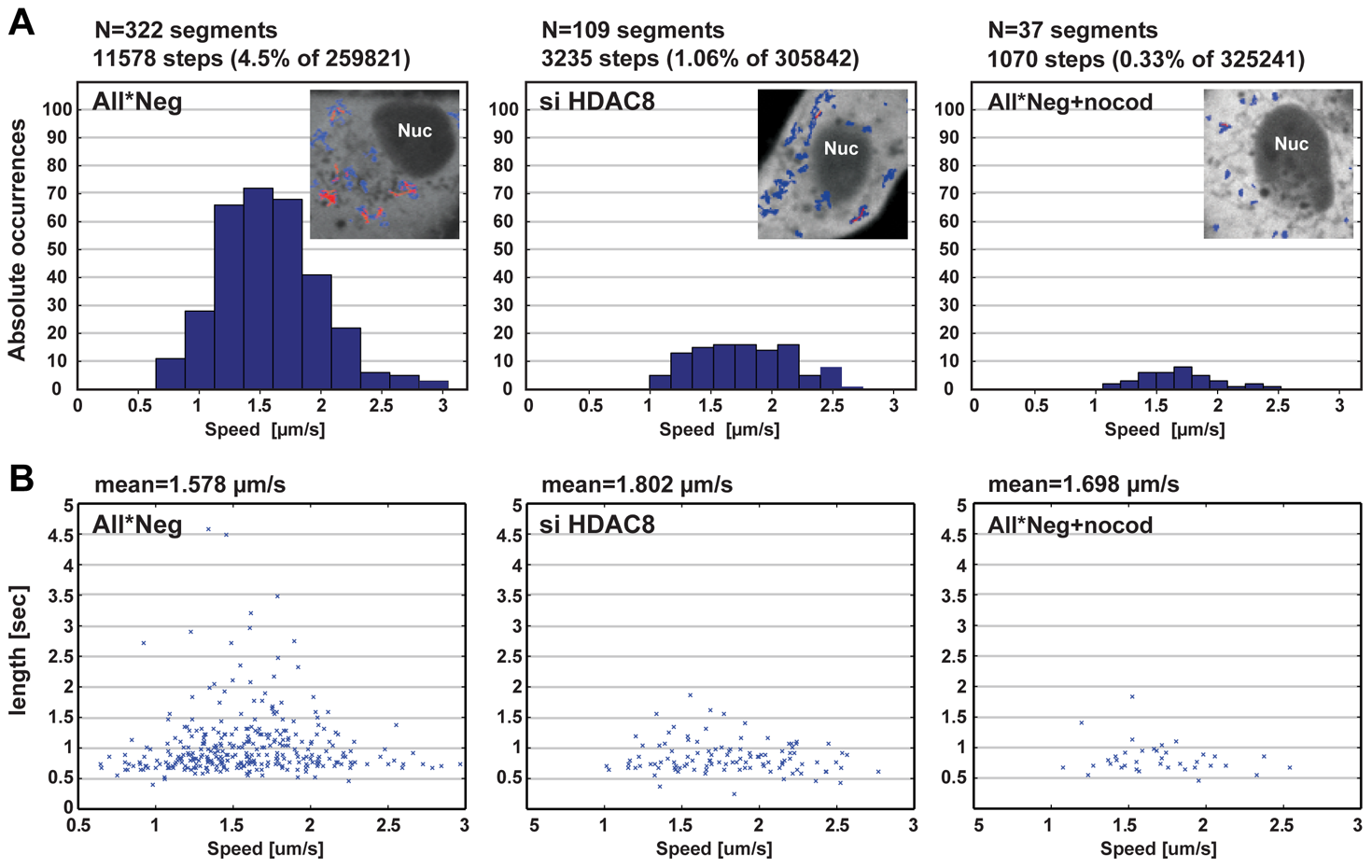 HDAC8 is required for LE/LY motility.