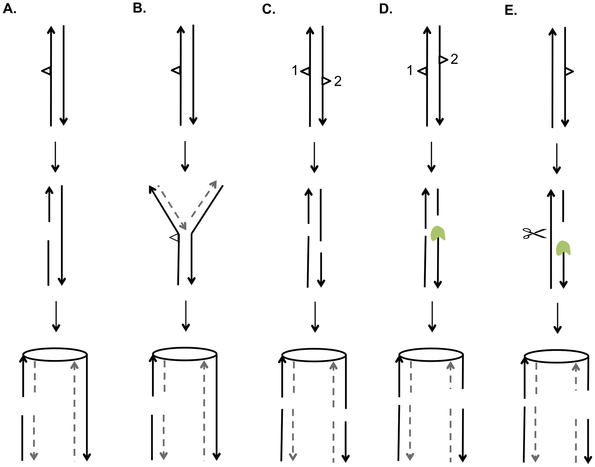 Mechanisms for generating UV-induced recombinogenic DSBs.