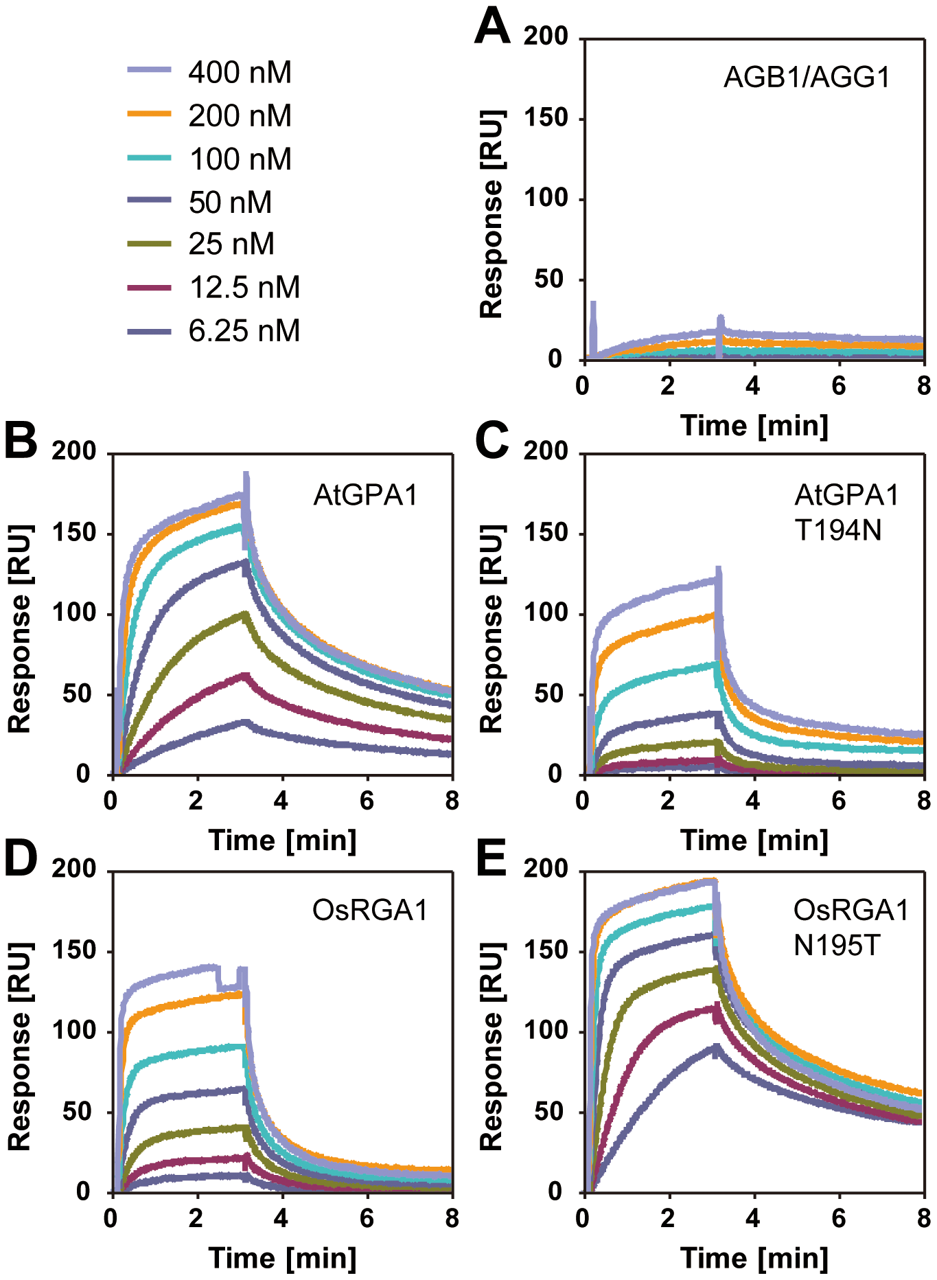 Affinity of plant Gα to AtRGS1 immobilized on the SPR biosensor.