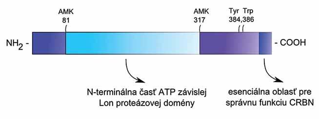 Štruktúra proteínu CRBN.