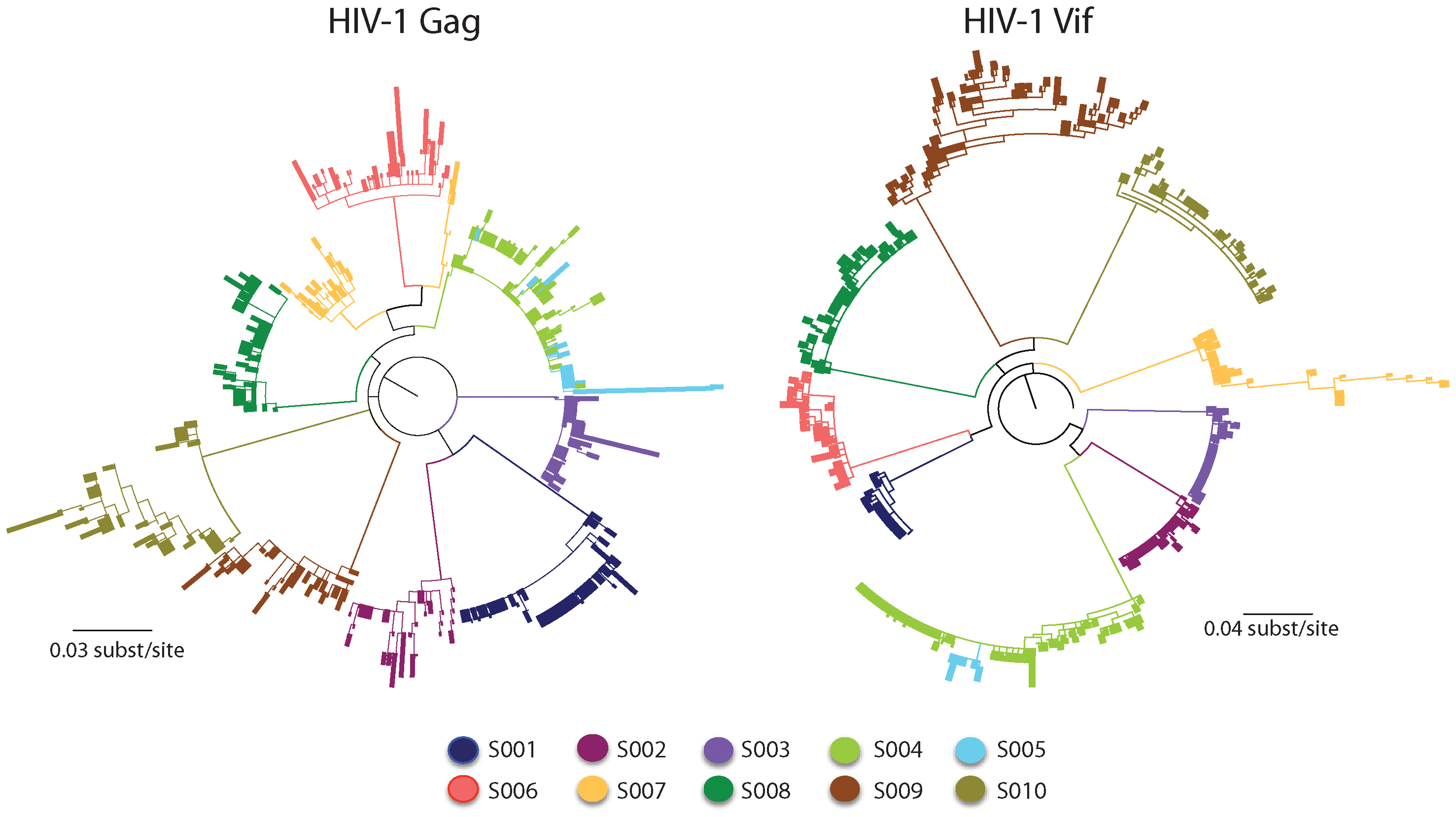Maximum-likelihood tree for HIV-1 sequences from the patients studied.