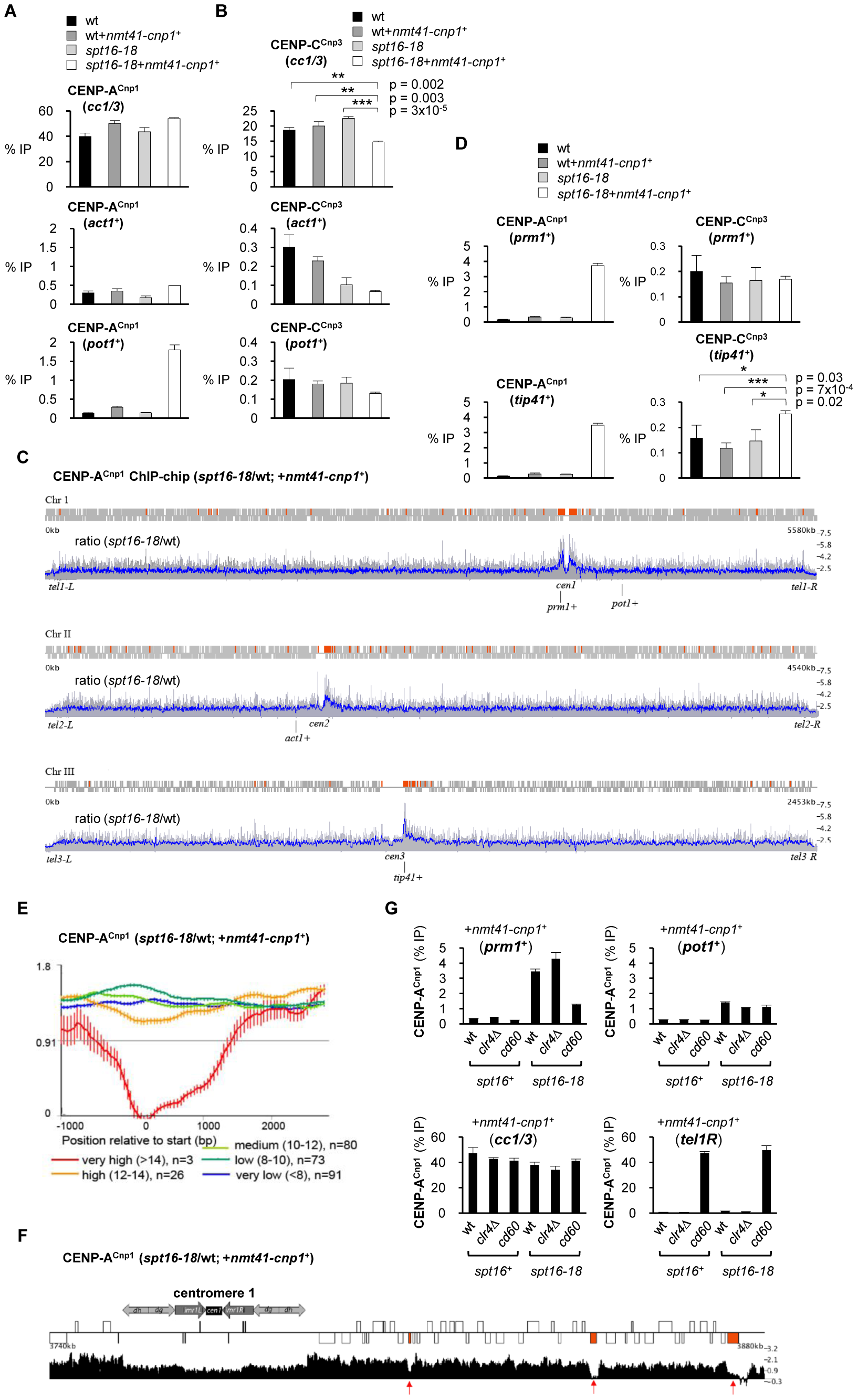 Spt16 prevents promiscuous incorporation of CENP-A<sup>Cnp1</sup>.