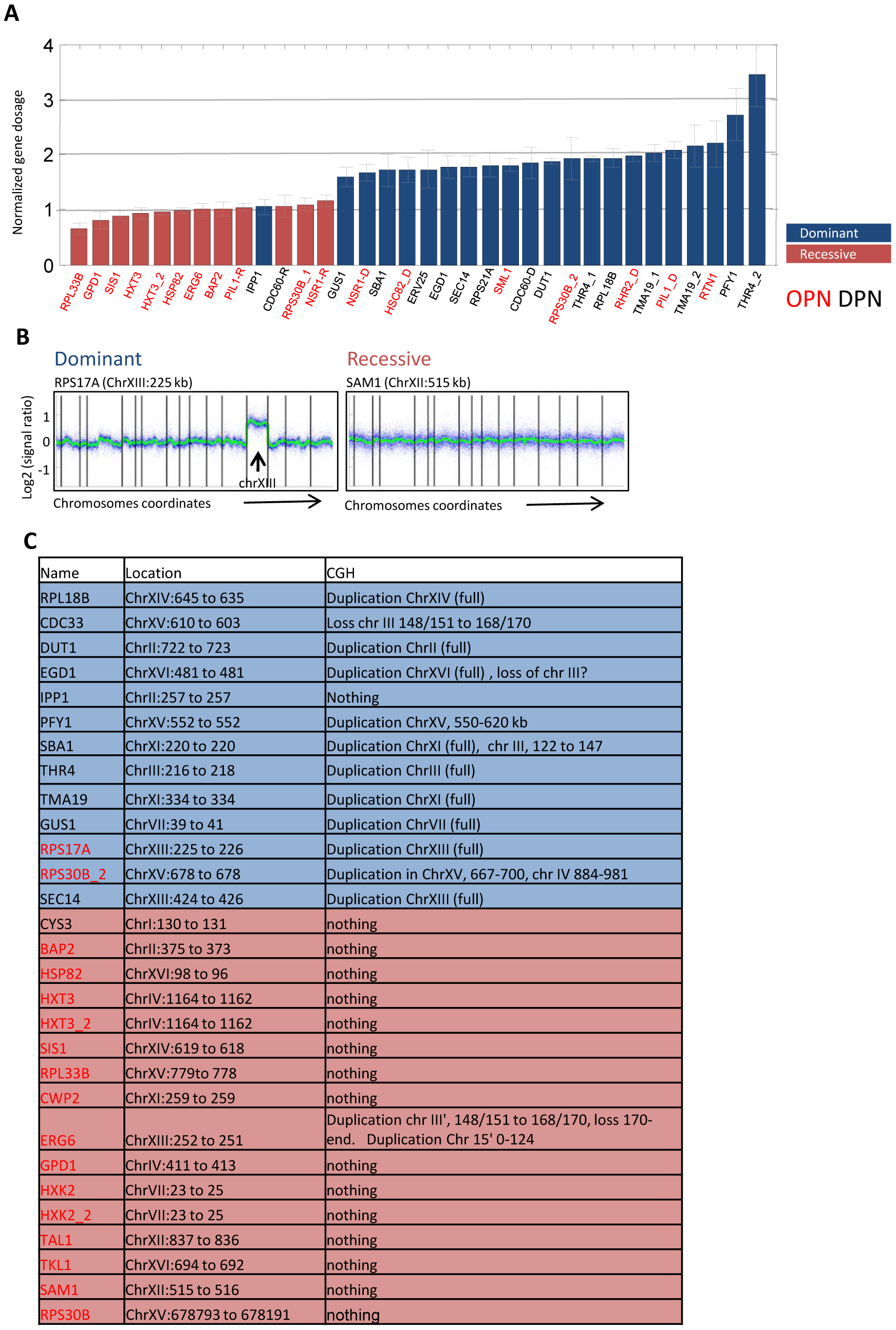 Dominant mutations involve large-scale genomic duplications.