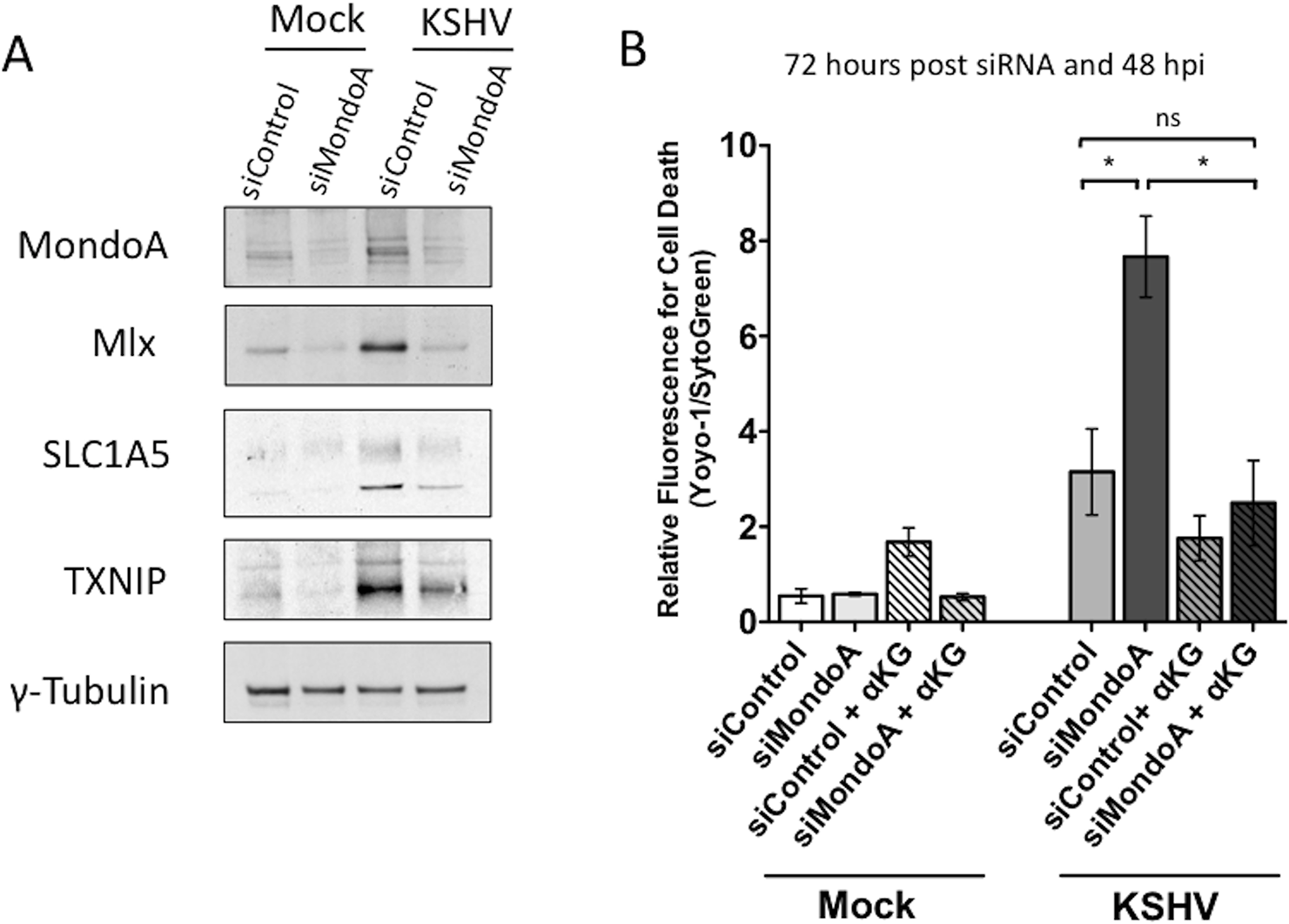 MondoA regulation of glutaminolysis is required for the survival of endothelial cells latently infected with KSHV.