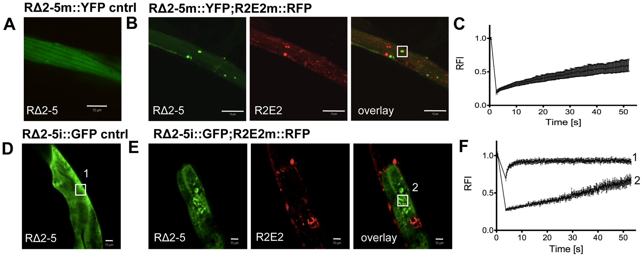 R2E2 induces widespread aggregation of RΔ2-5.