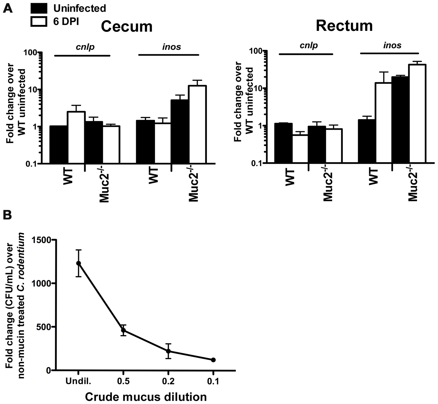 Evidence that <i>Muc2<sup>−/−</sup></i> mice do not have intrinsic defects in anti-microbial activity at their mucosal surface.