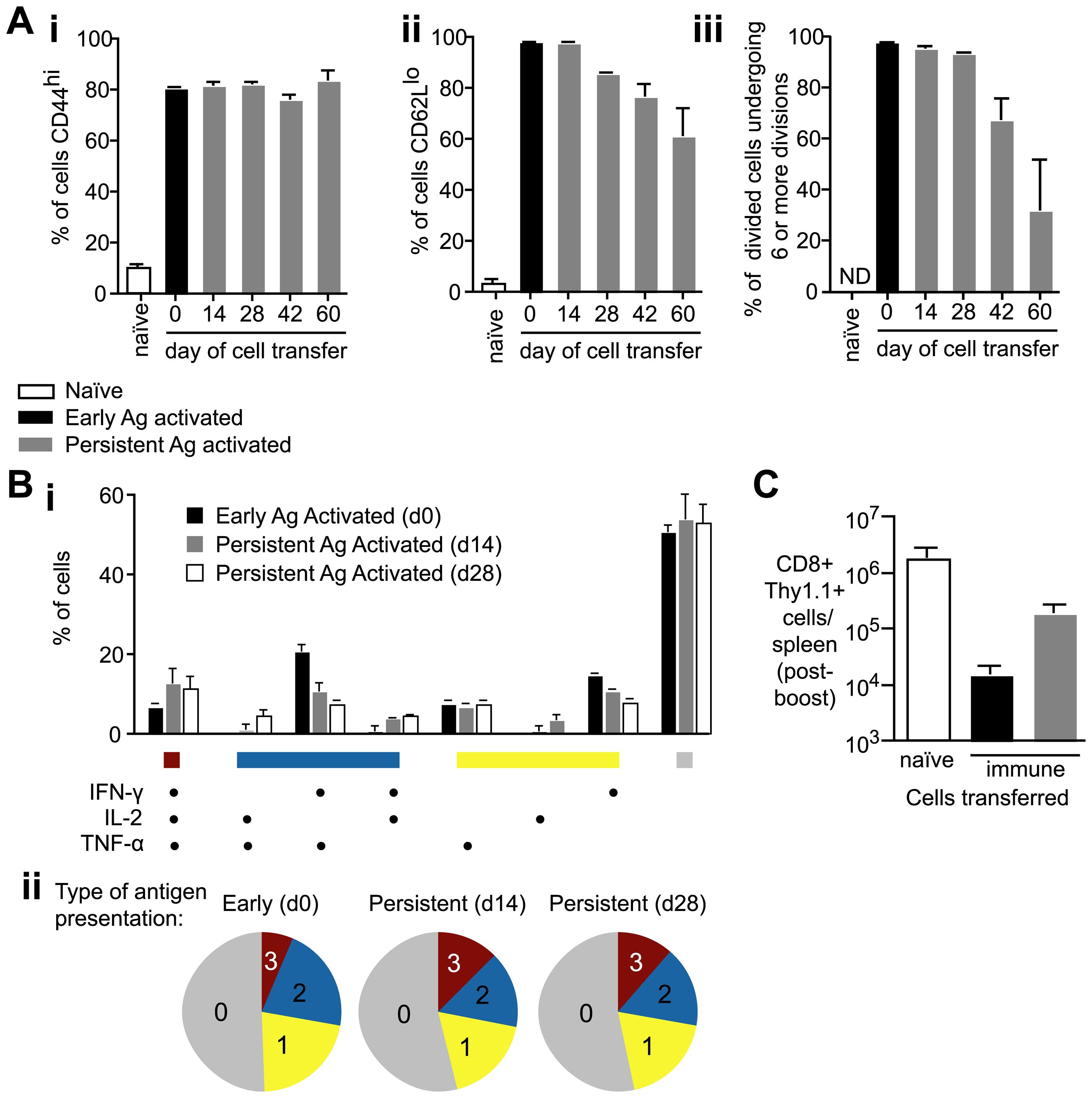 Antigen presentation weeks after immunization can prime T cells to become functional effector cells.