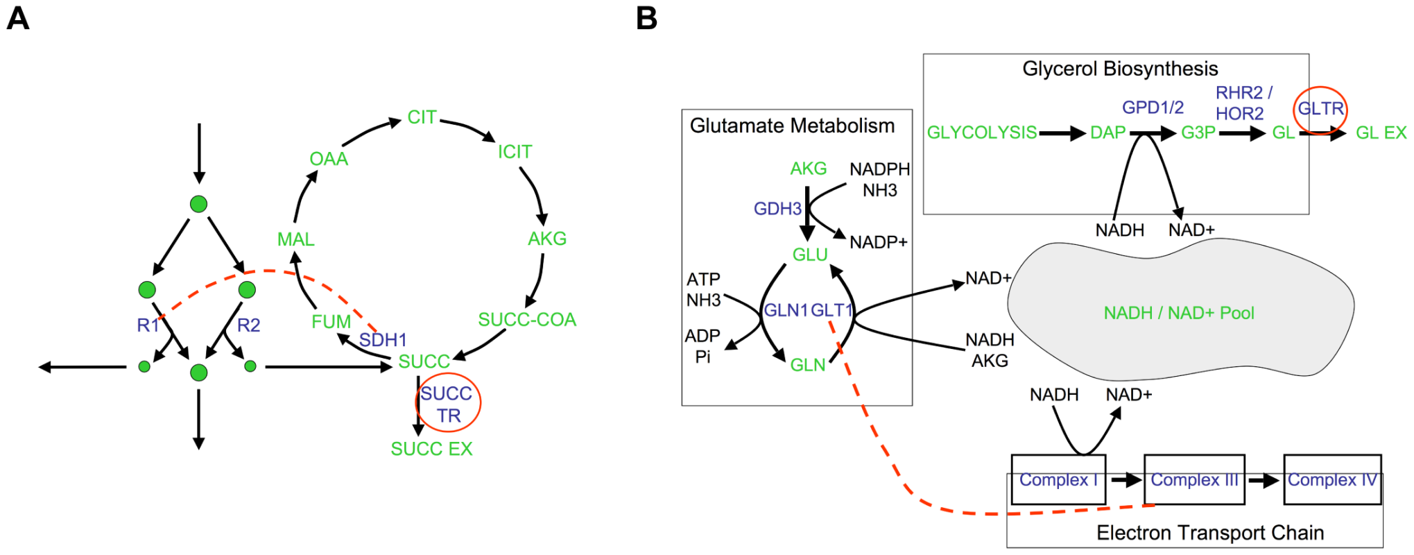 Examples of epistatic interactions (red dashed lines) with respect to flux phenotypes (red circles), overlaid on the corresponding metabolic pathways.