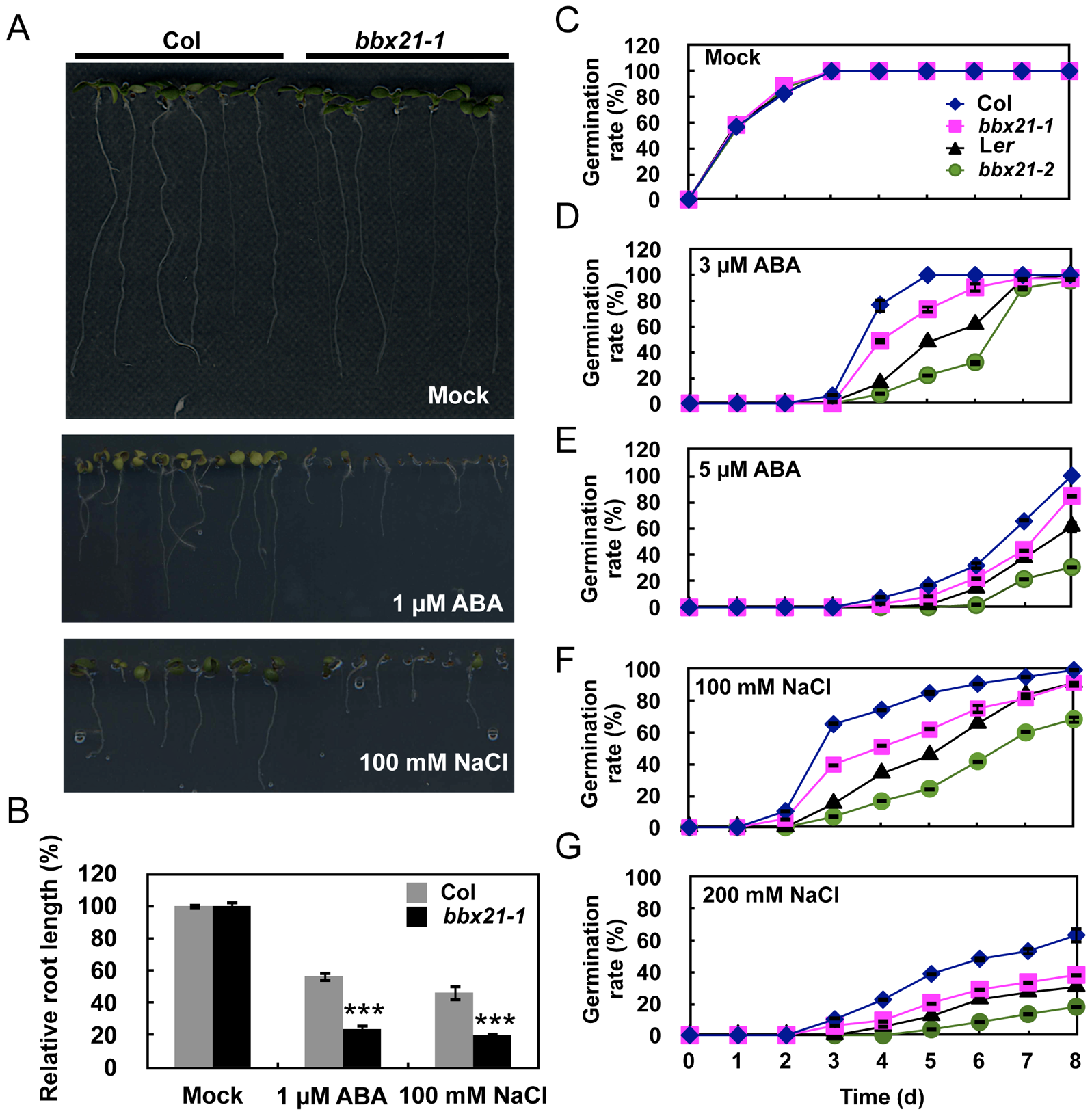 The <i>bbx21</i> mutants are hypersensitive to ABA and NaCl during germination.