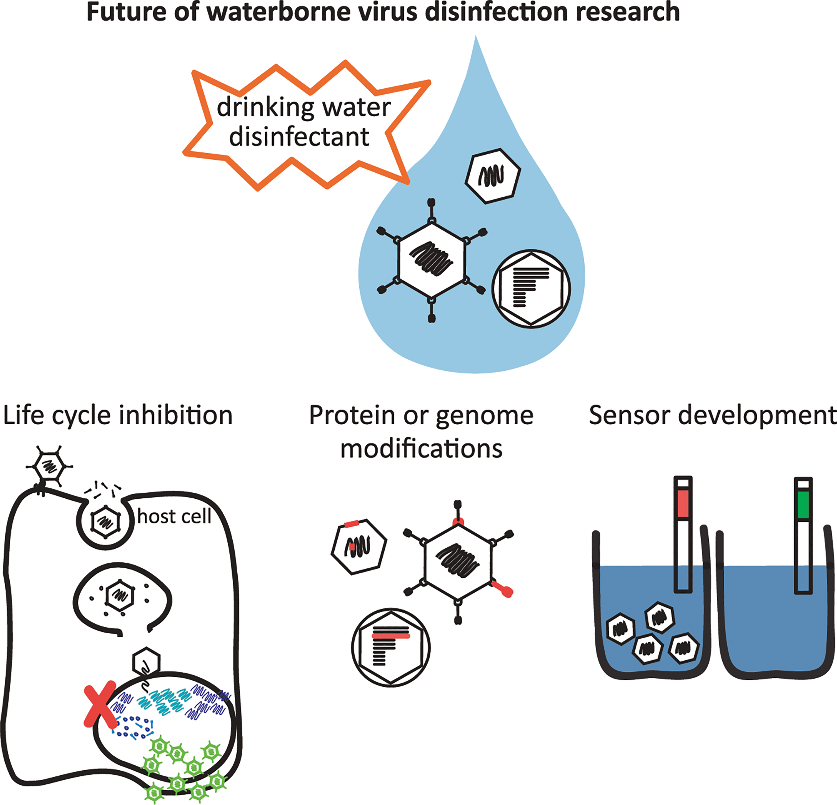 Future of waterborne virus research to provide safe drinking water globally.