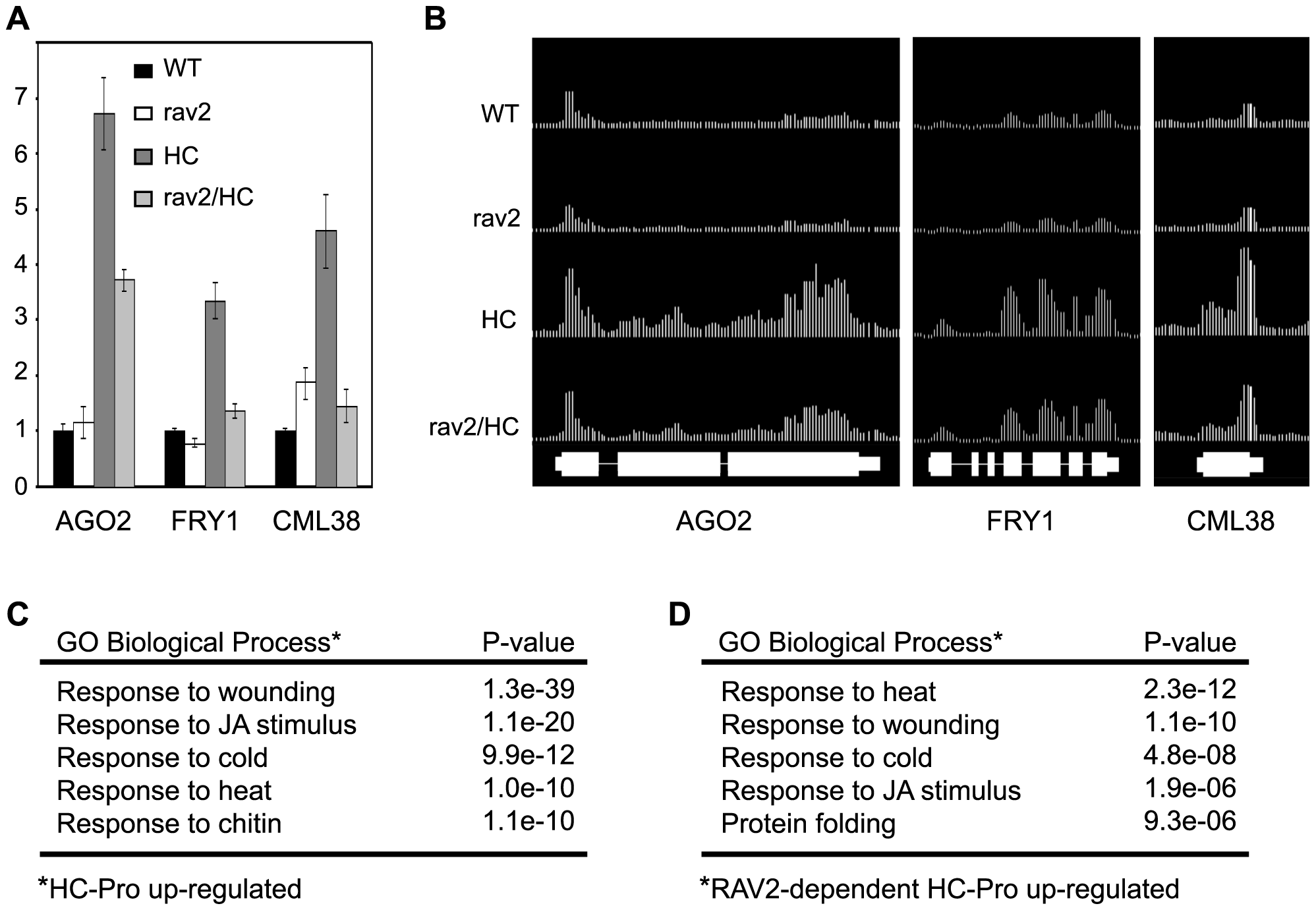 Tiling Microarray Analysis and RT qPCR Show <i>RAV2</i>-dependent Up-regulation of Silencing-associated Genes by HC-Pro.