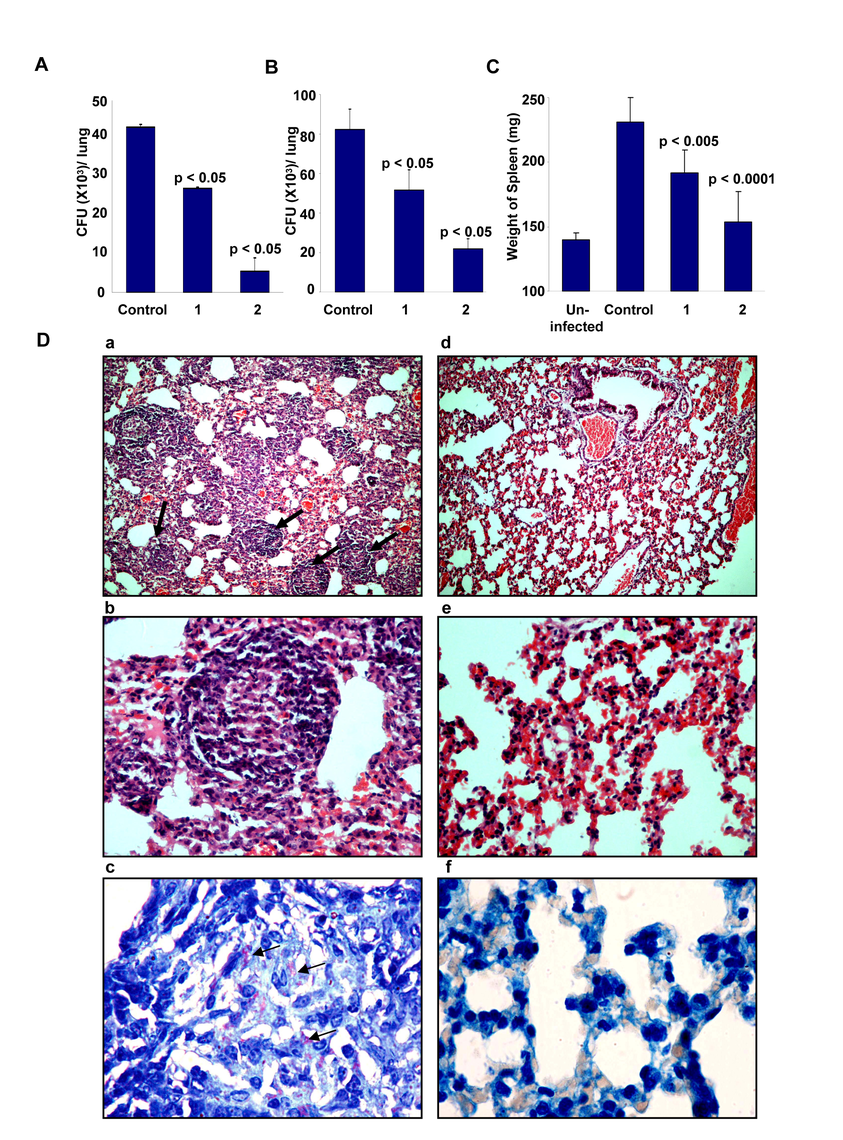 Efficacy of D4476 in the murine model of Mtb infection.