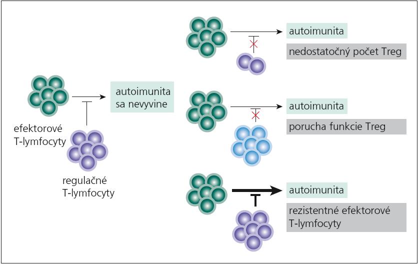 Príčiny neúspešnej funkcie regulačných T-lymfocytov pri vývoji autoimunity. Regulačné T-lymfocyty neuplatnia svoju tlmivú funkciu pretože ich je málo v dôsledku určitej poruchy pri ich diferenciácii, ako je nedostatok cytokínov (IL-2, TGF-β), kostimulácie (CD28) a pod. Ďalej Treg-lymfocyty môžu byť v norme, ale nie sú plne funkčné, napr. neprodukujú dostatok imunosupresívnych cytokínov (IL-10, IL-35, TGF-β), alebo dochádza k poruche kontaktnej imunosupresívnej interakcie. Napokon aj počty aj funkcia Treg-lymfocytov sú v norme, ale terčová skupina buniek na ich imunosupresívne pôsobenie neodpovedá, napr. pre veľké množstvo cytokínov, ktoré produkujú (IL-2, IL-4, IL-6, IL-15) alebo pre svoj výslovne prozápalový charakter (T<sub>H</sub>17-subpopulácia).