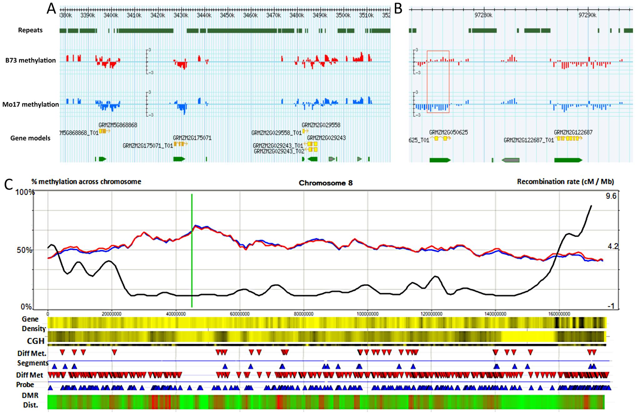 Synopsis of chromosome-level methylation and variation.