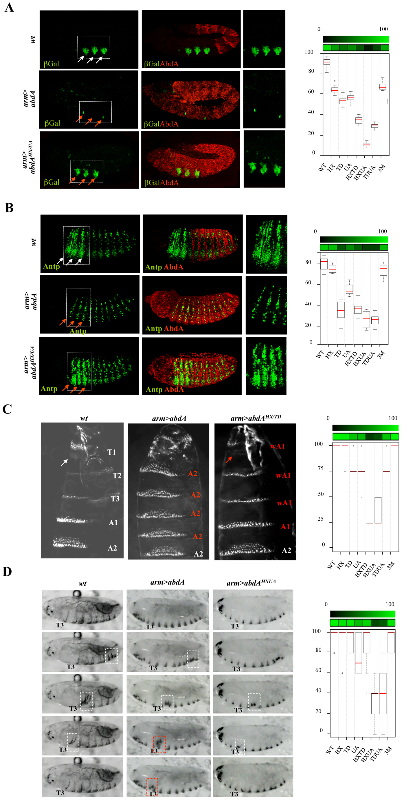 Mutually suppressive interaction of protein domains.