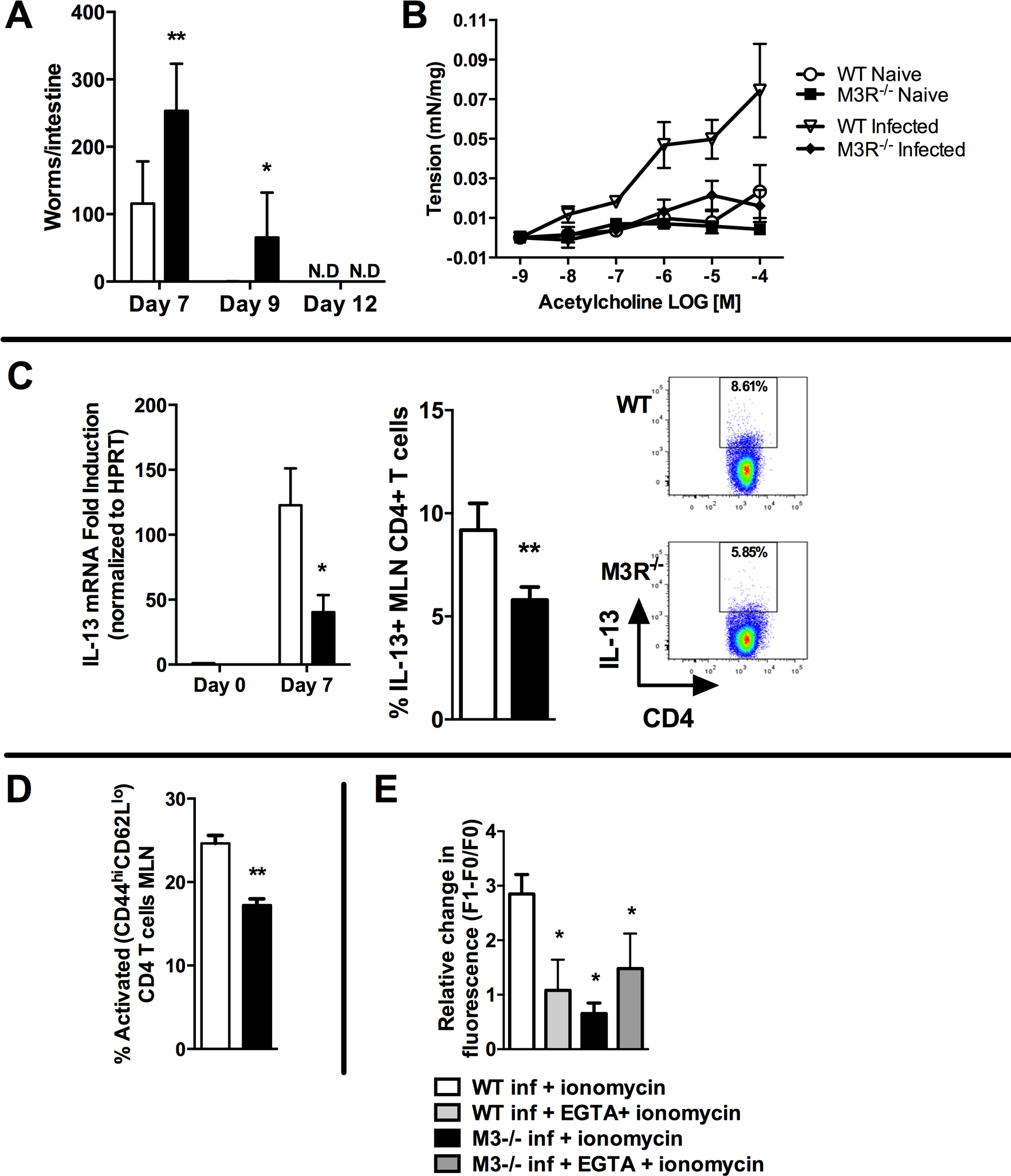 M3R deficient mice exhibit delayed clearance of a primary <i>N. brasiliensis</i> infection and impaired T cell-associated protective responses.