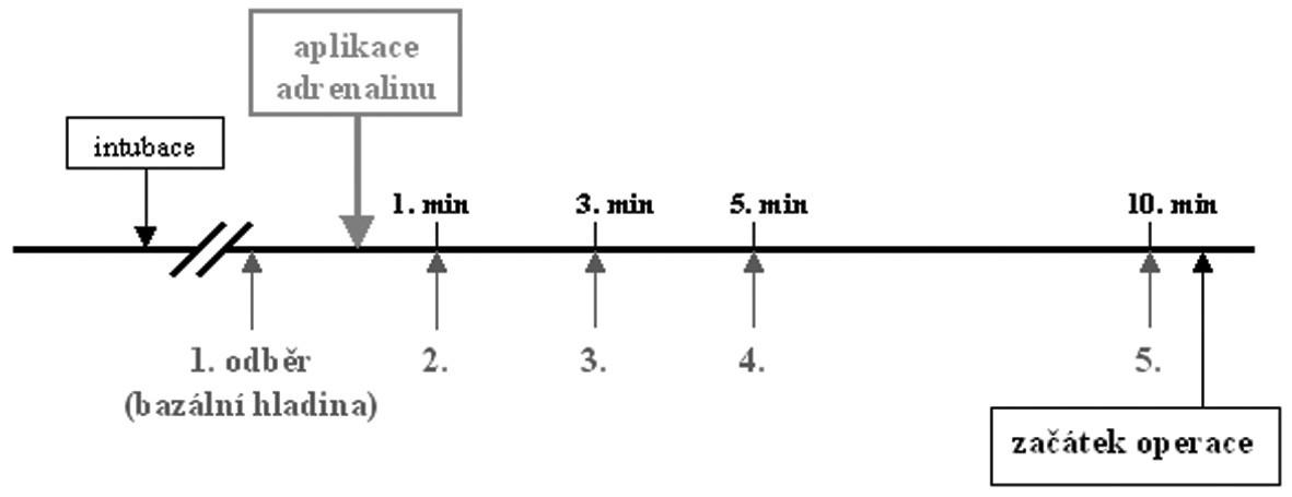 Časová osa - odběry venózní krve u infekční aplikace adrenalinu.